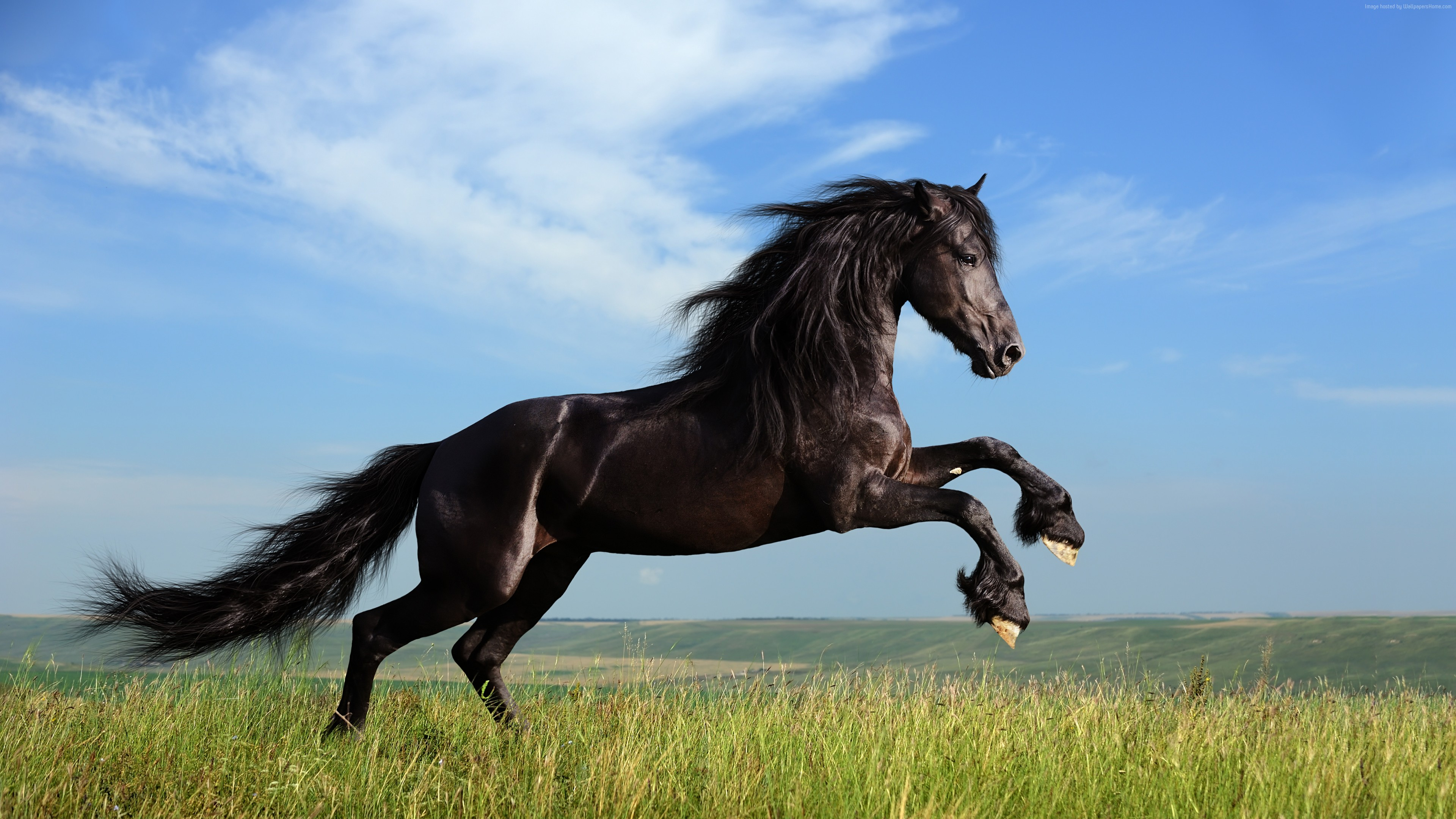 Wallpaper Horse, gallop, meadow, sky, Animals
