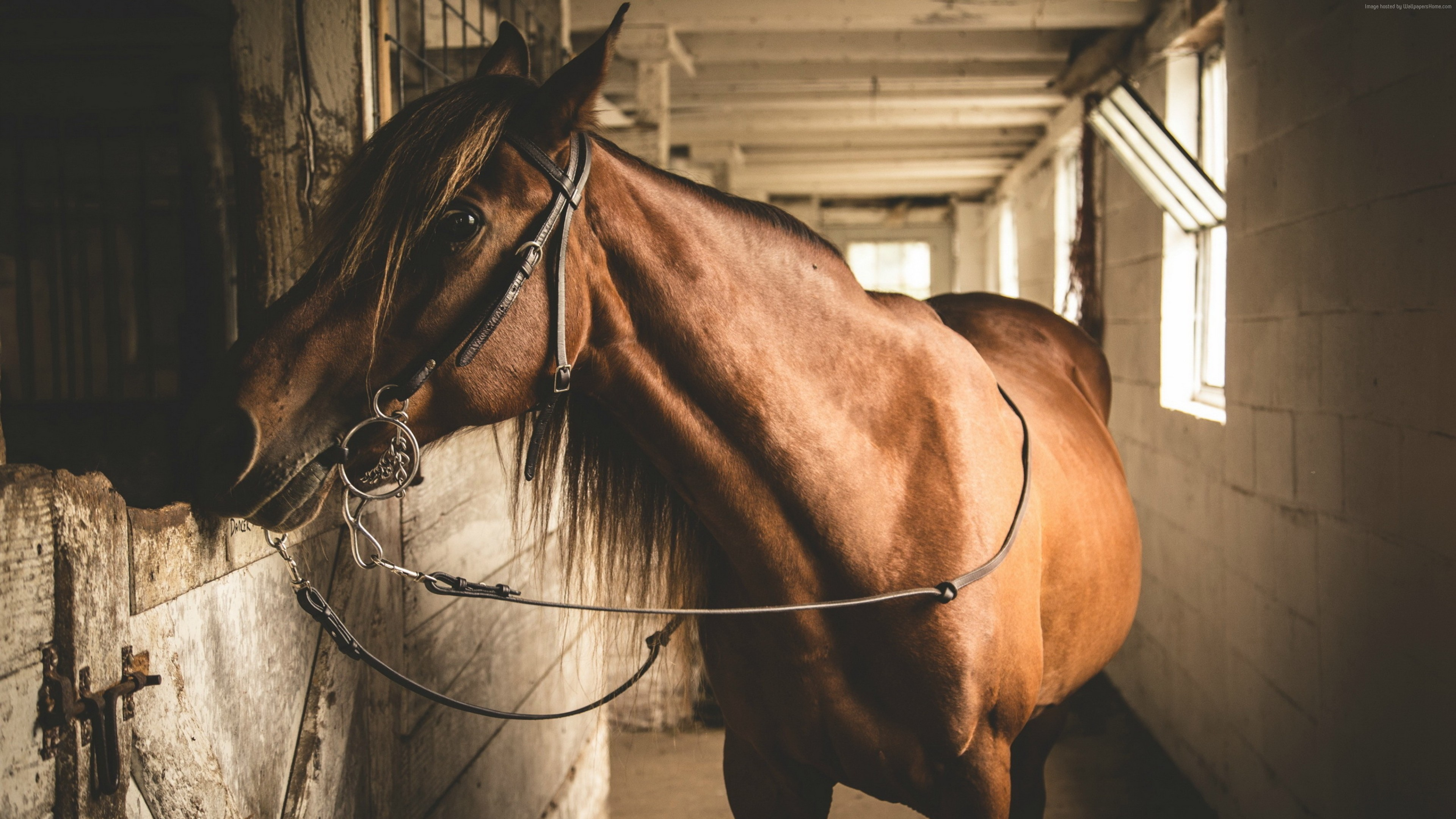 Wallpaper Horse, stable, brown, cute animals, Animals