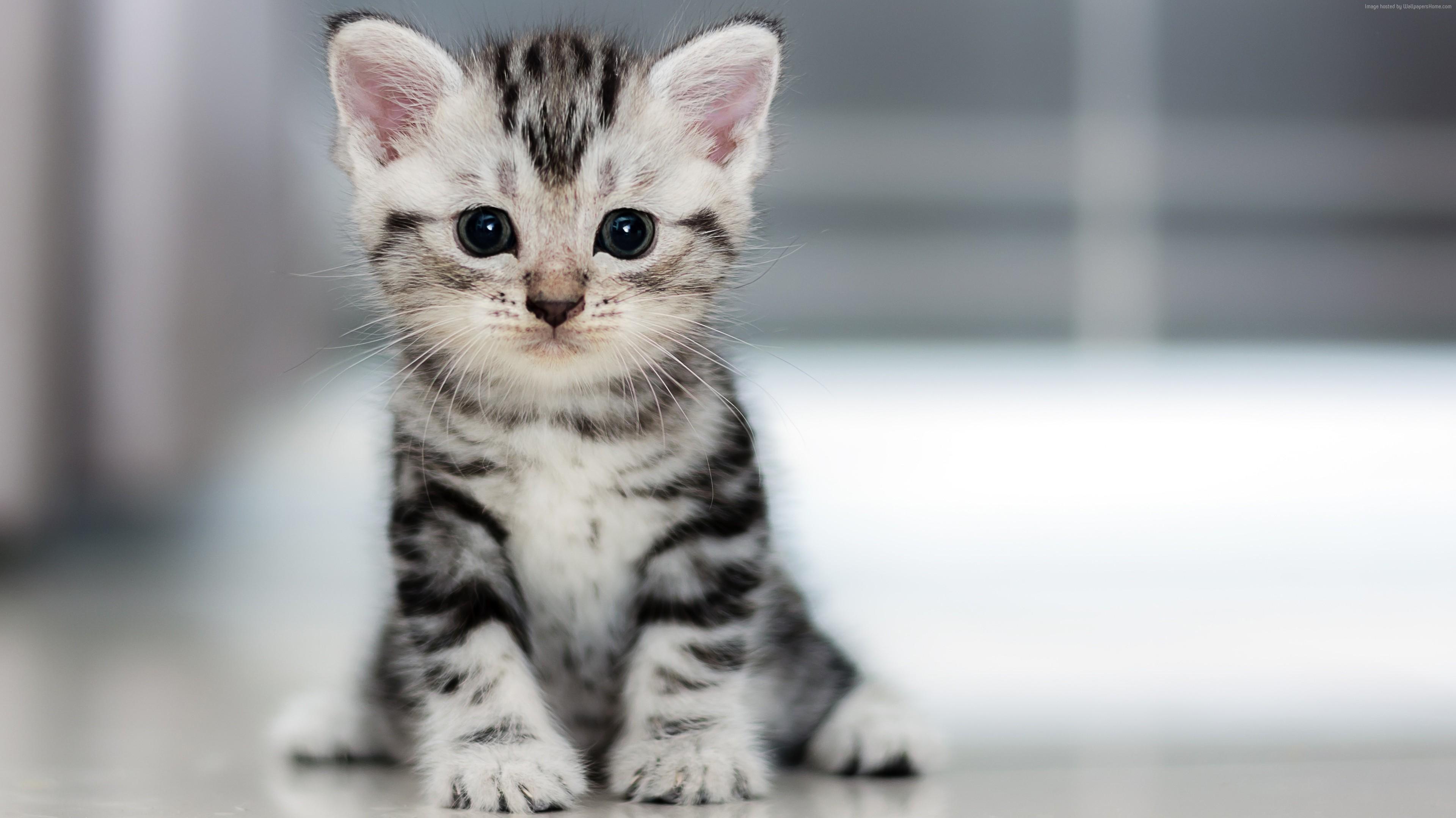 Wallpaper Kitten Cat Cute 4k Animals Wallpaper Download High Resolution 4k Wallpaper