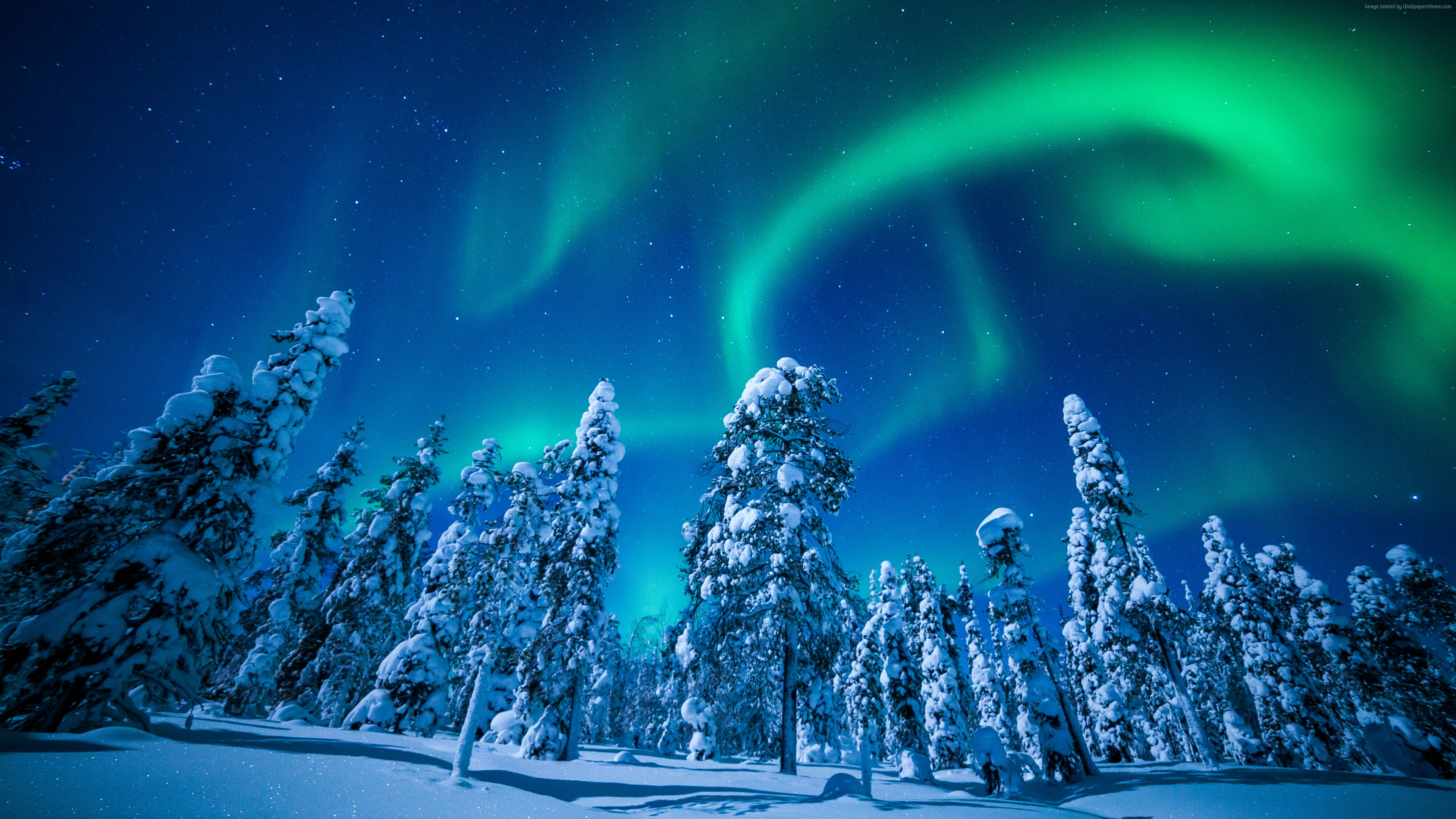Wallpaper Lapland, Finland, winter, snow, tree, night, northern lights, 5k, Travel