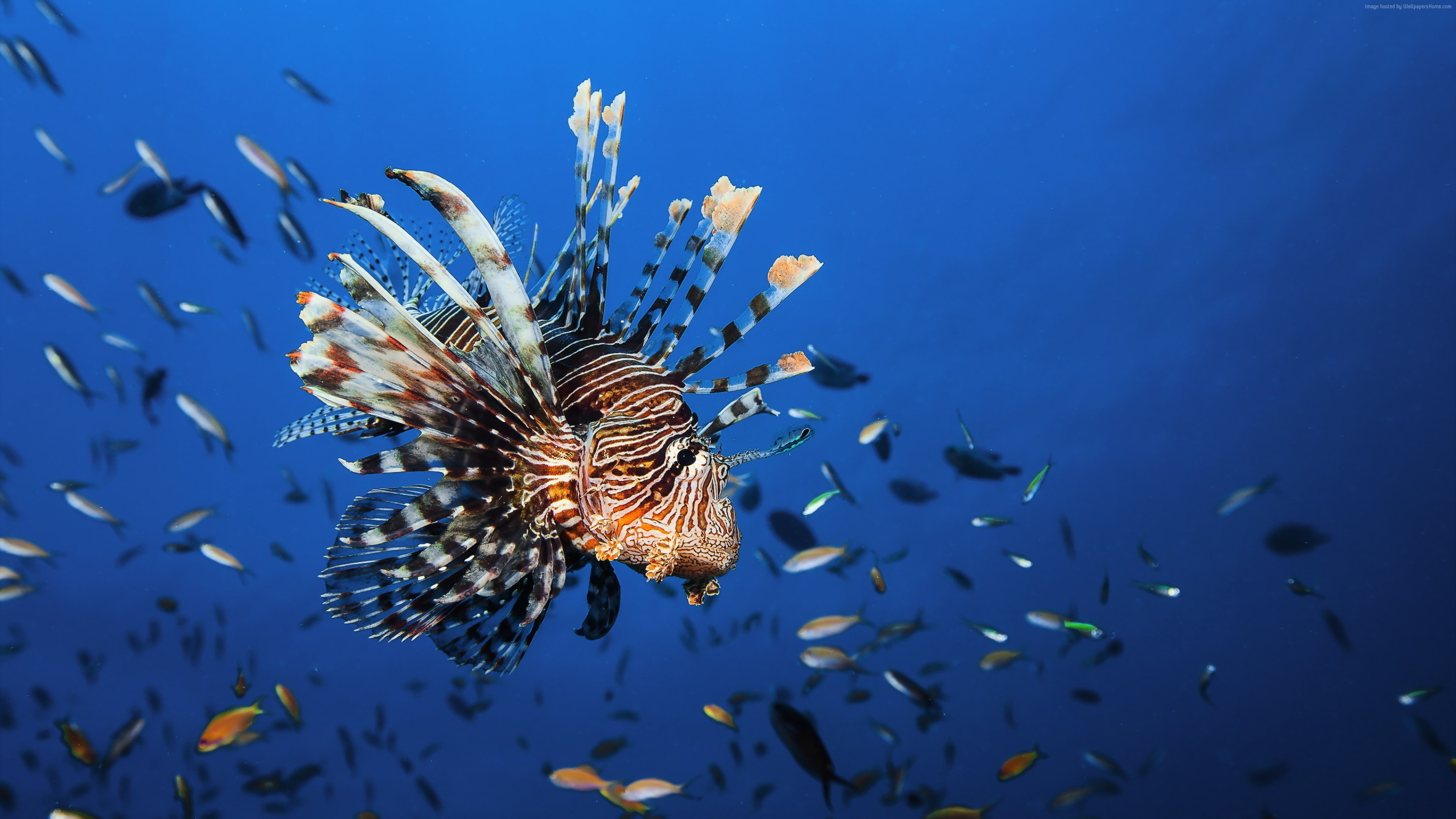 Wallpaper Lionfish, underwater, Best Diving Sites, Travel