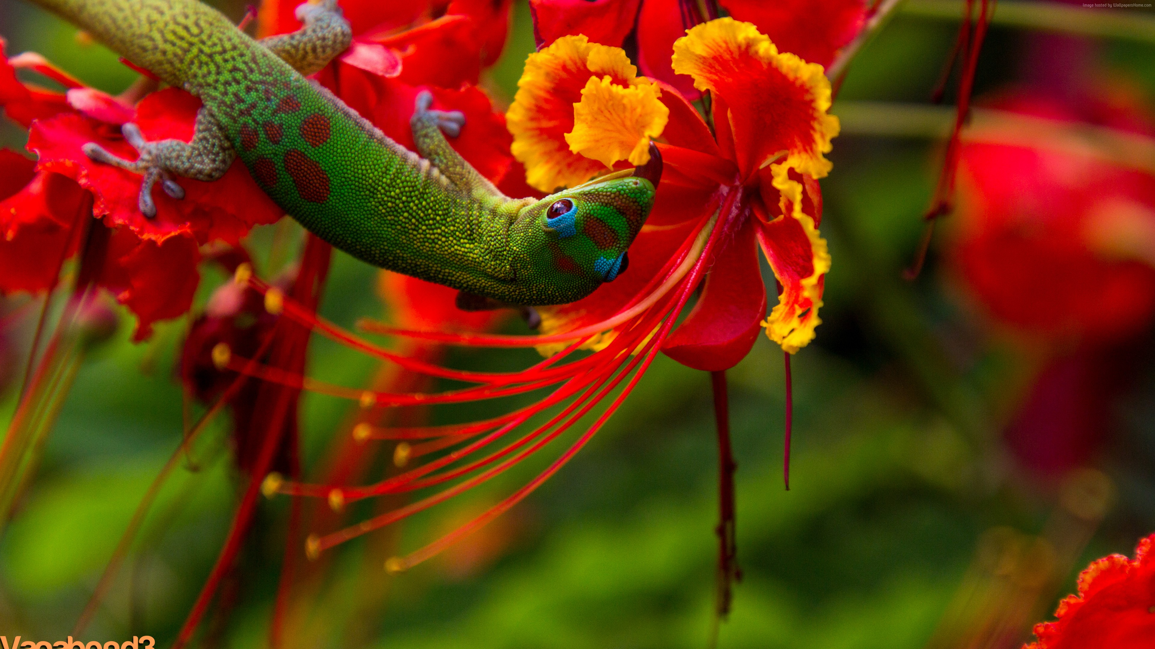 Wallpaper Lizard Hilo Hawaii Lizard Green Flowers Red