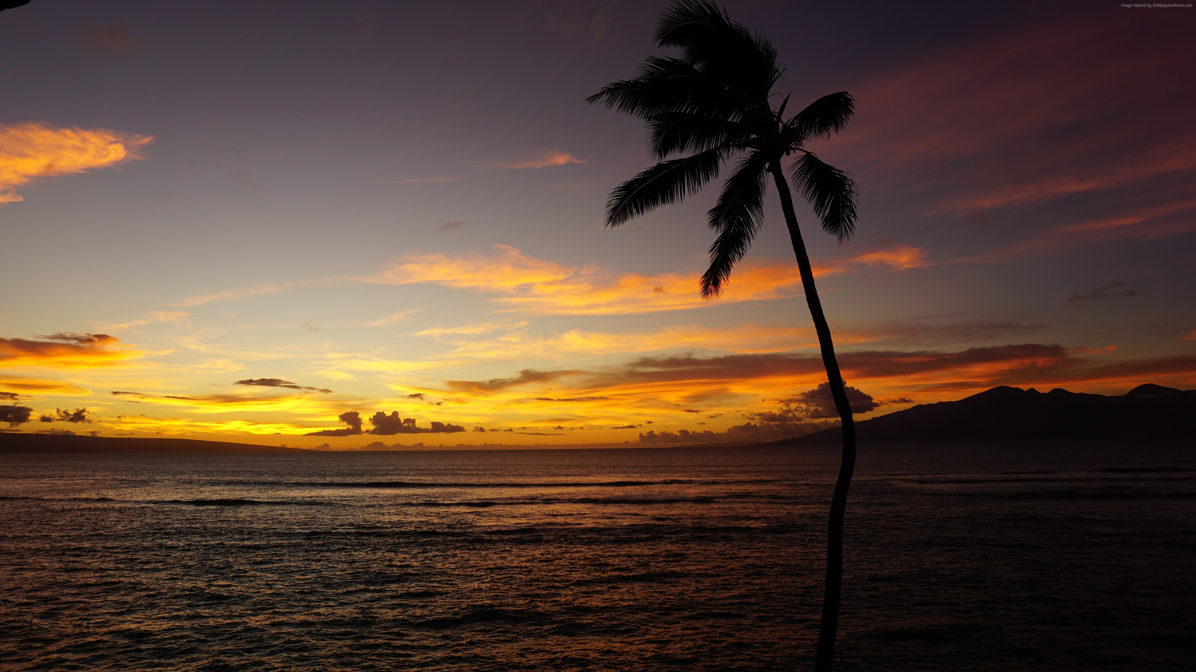 wallpaper maui, hawaii, ocean, palm, sunset, 5k, nature 5k, hawaii
