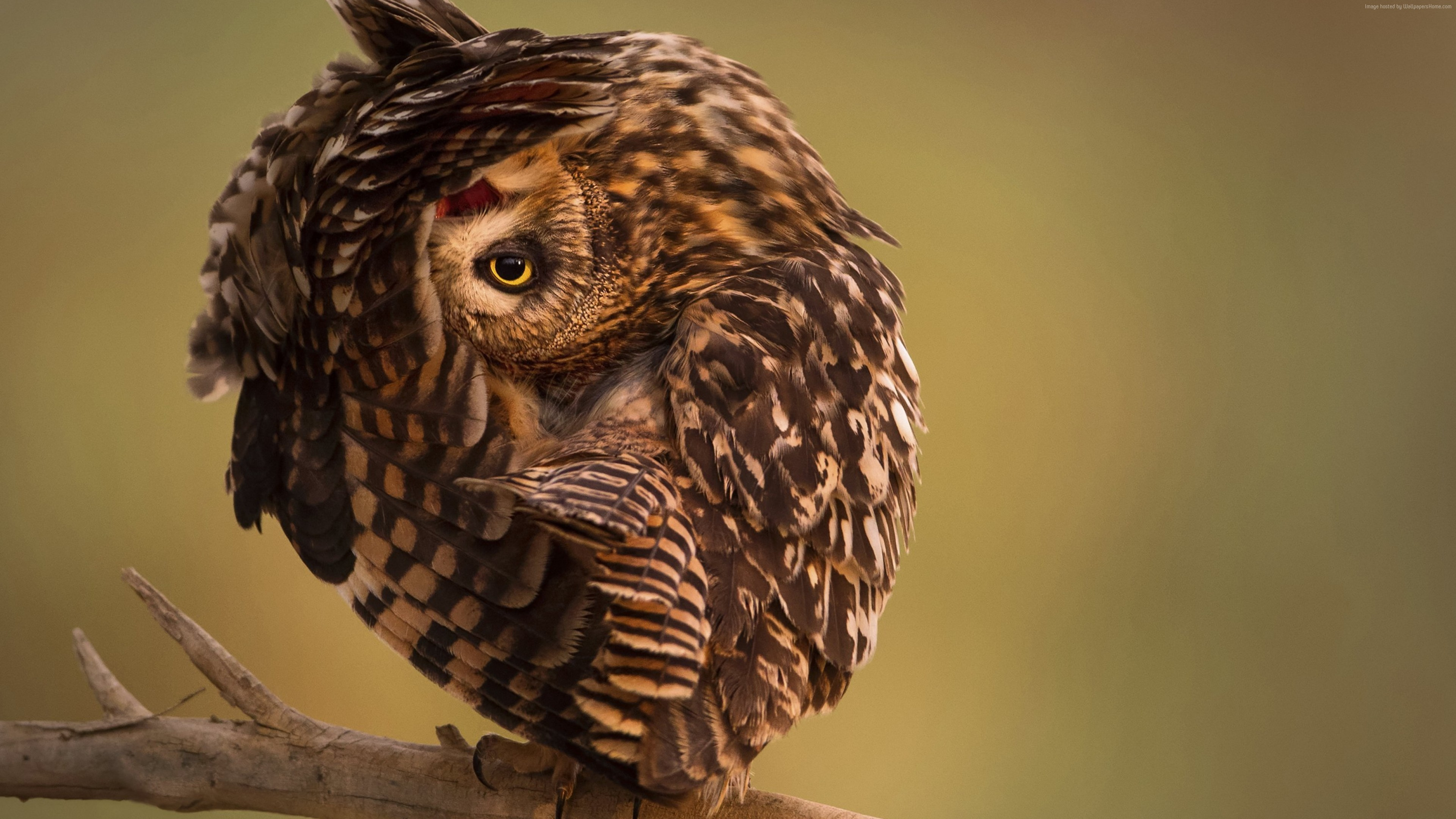 Wallpaper National Geographic, 4k, HD wallpaper, Owl, Funny, Animals