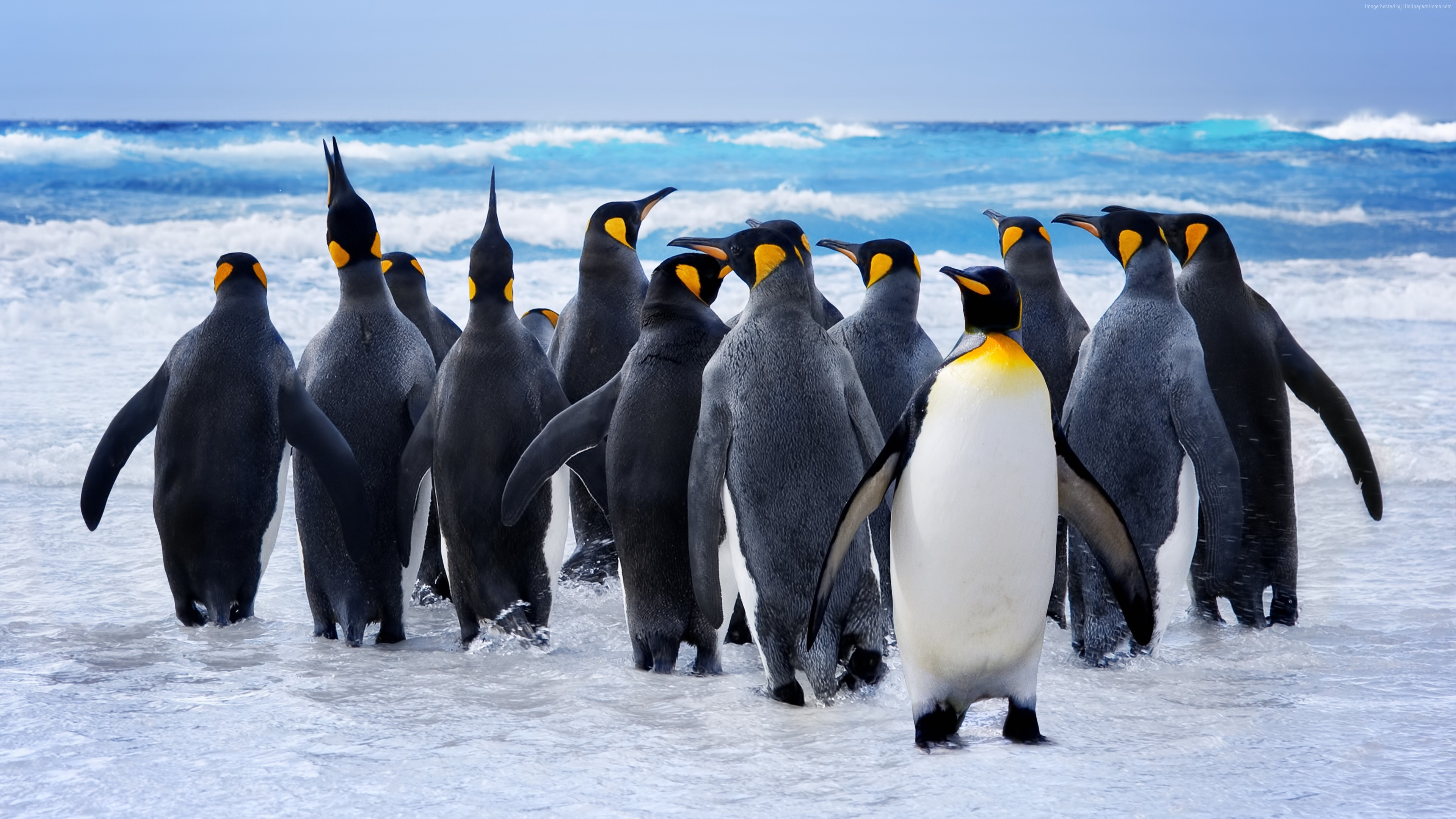 Wallpaper Pinguin, snow, ocean, cute animals, funny, Animals