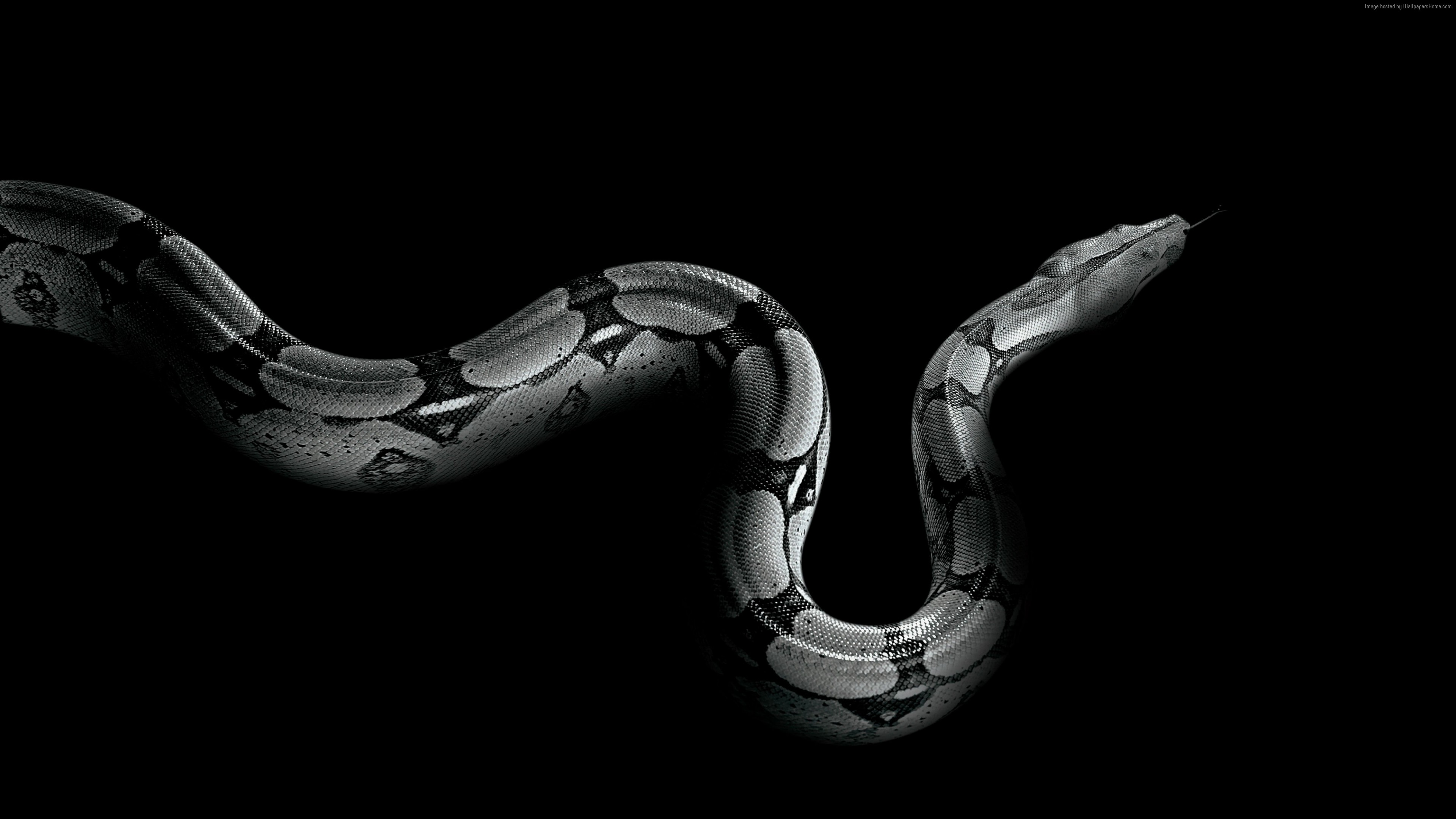 Wallpaper Python, snake, Animals