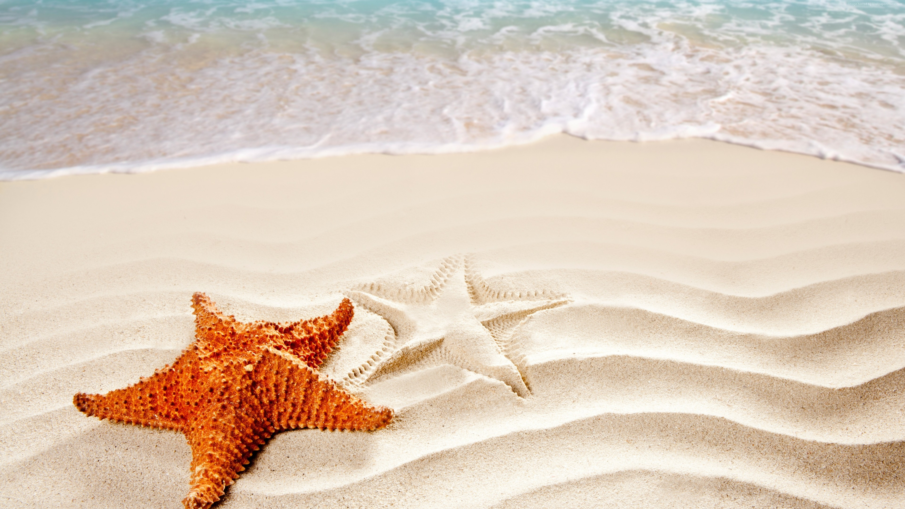Wallpaper Sea, 5k, 4k wallpaper, ocean, starfish, shore, Best Beaches in the World, Travel