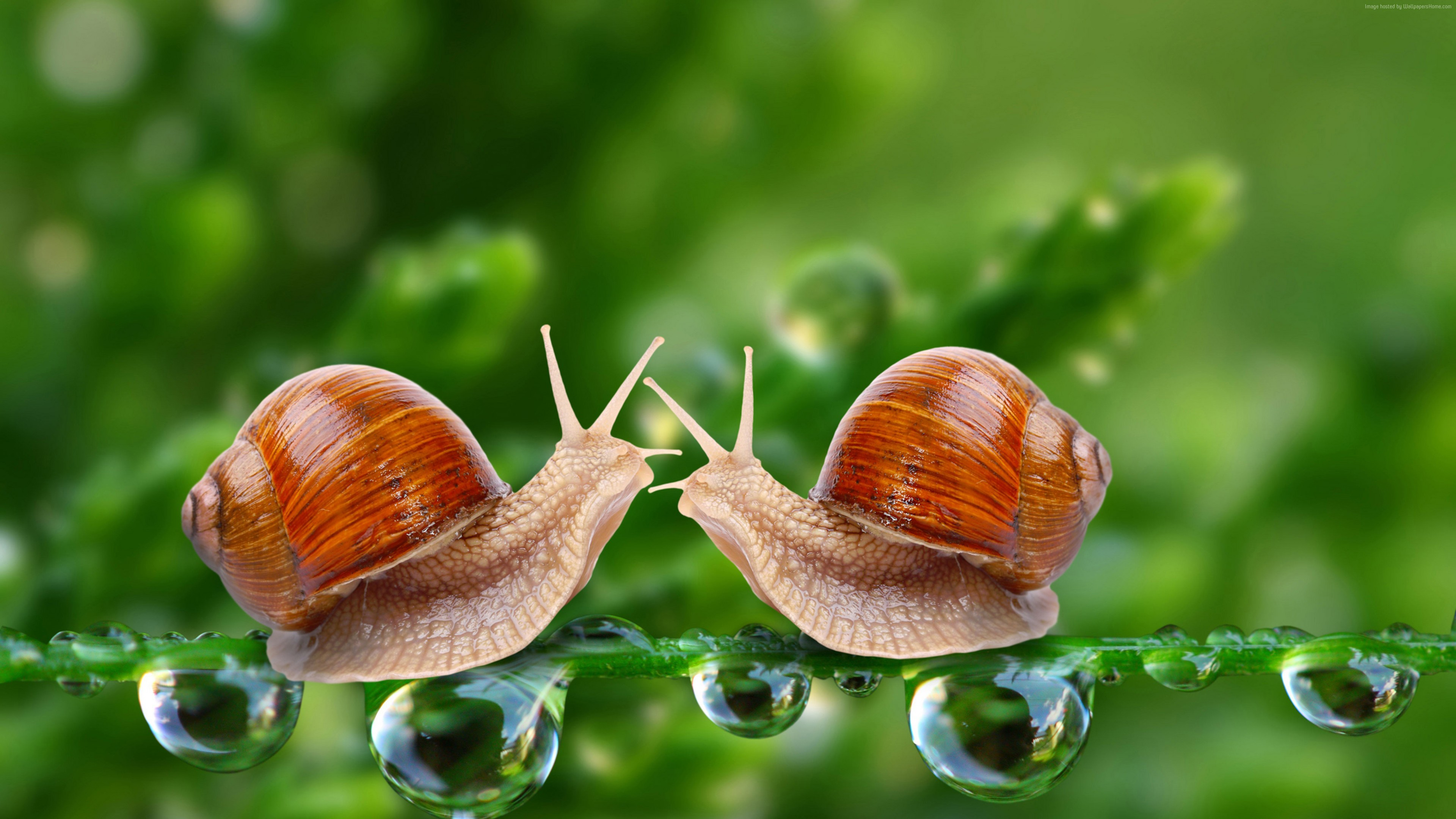 Wallpaper Snail, 5k, 4k wallpaper, water drops, green, nature, insects, close, Animals