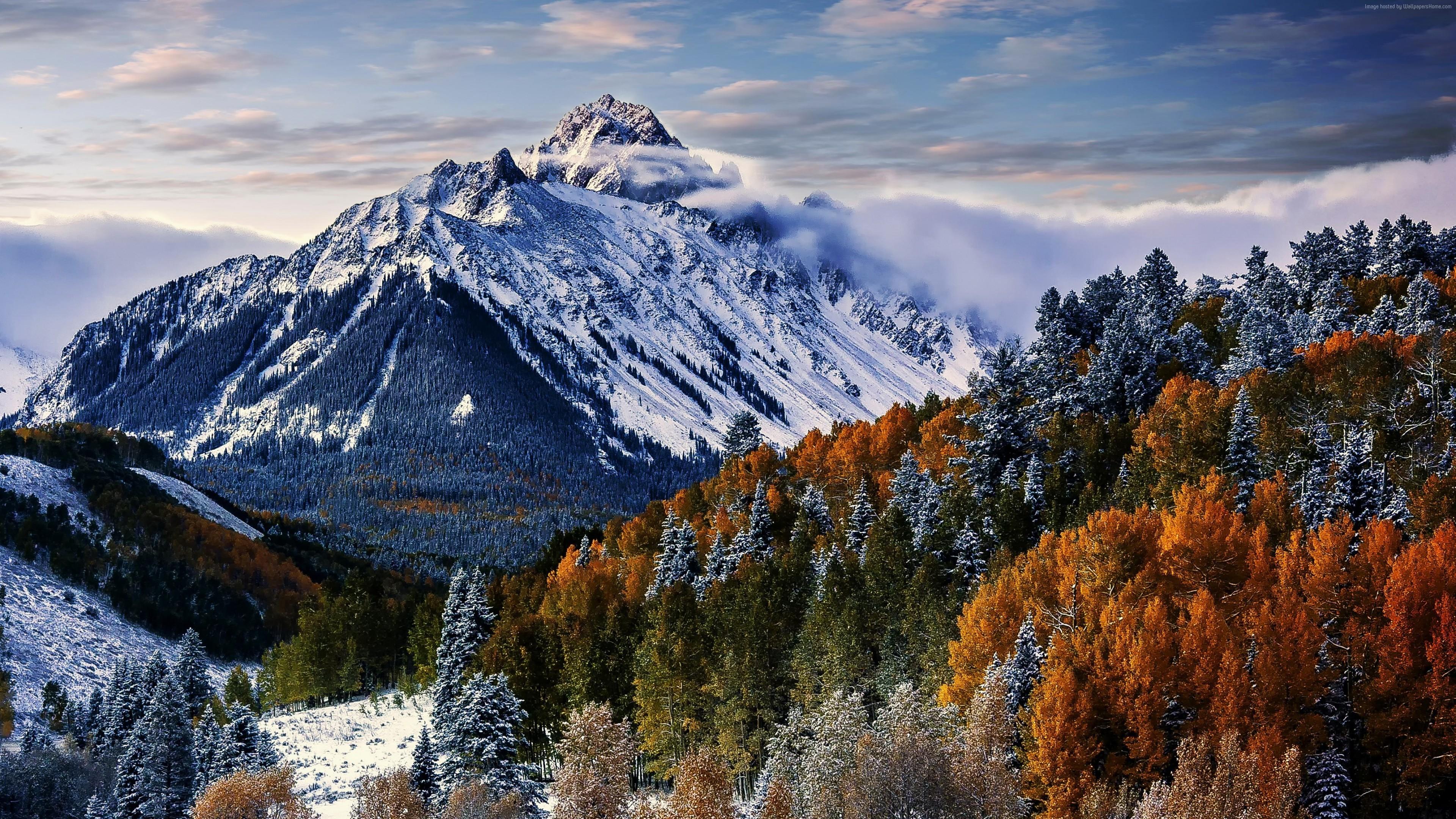 Wallpaper Sneffels Mountain Trees Winter Forest 4k Nature Wallpaper Download High Resolution 4k Wallpaper