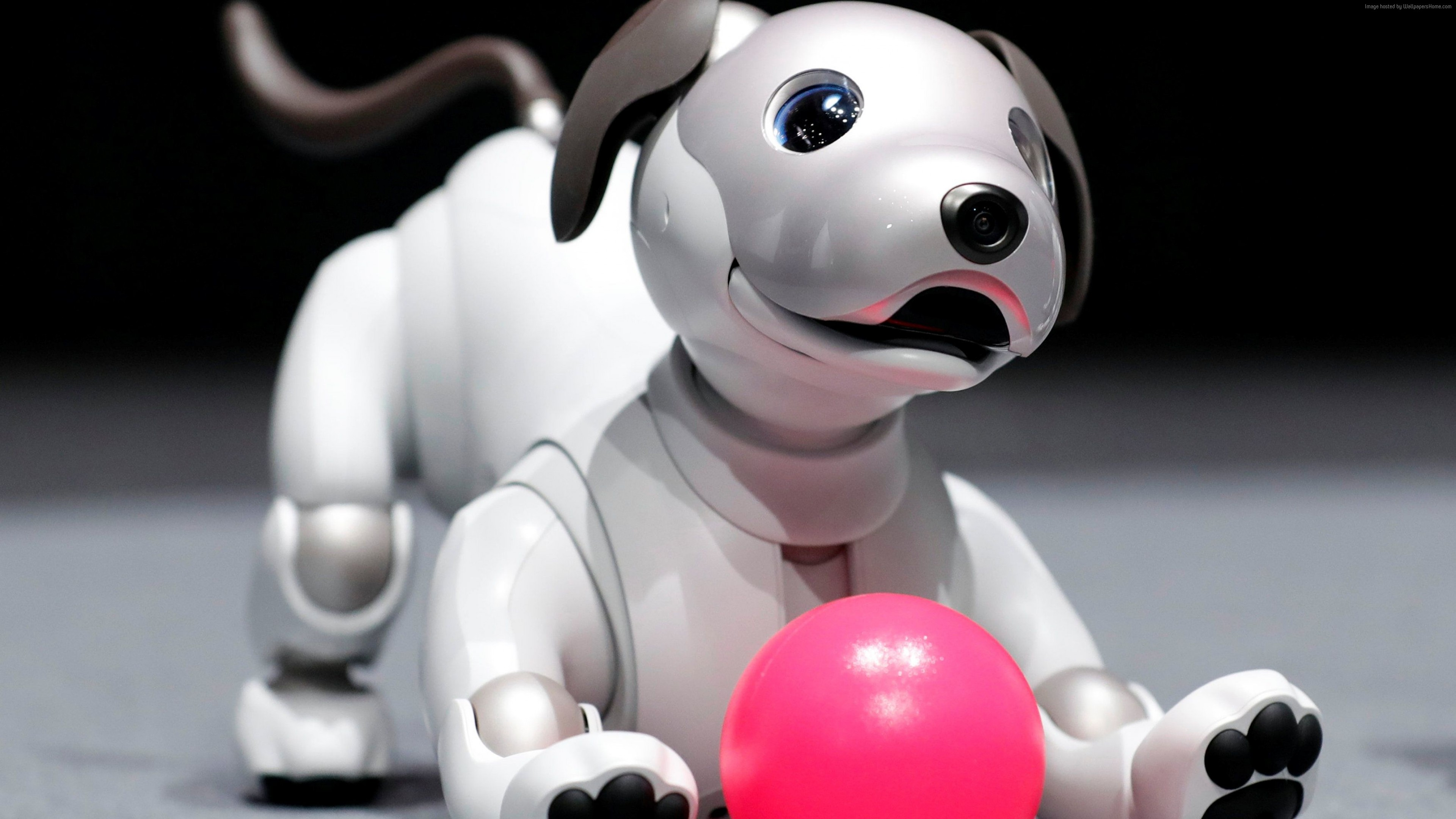 Wallpaper Sony Aibo, robot, dog, 4k, Hi-Tech