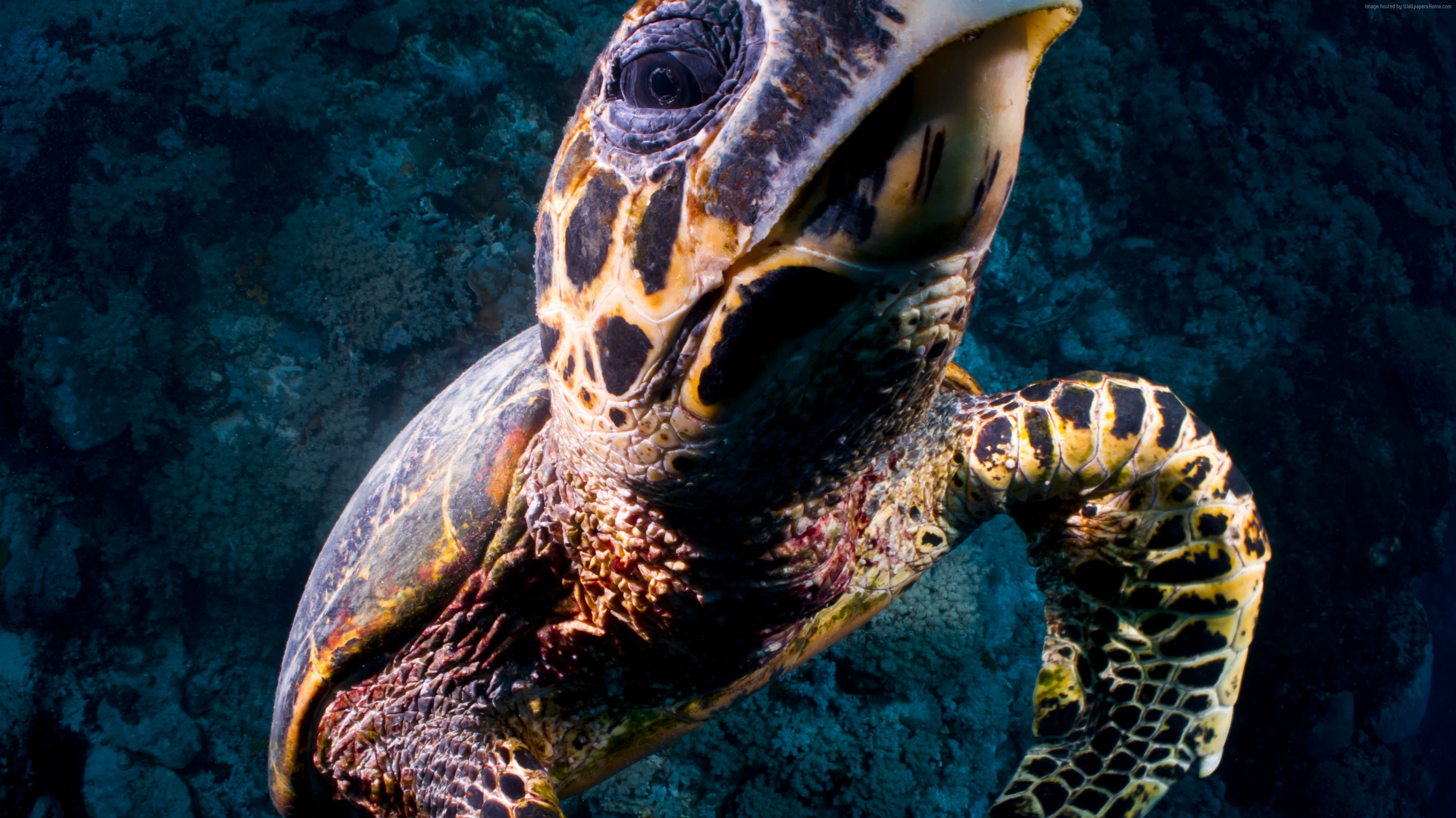 Wallpaper Turtle, Bloody Bay Wall, Little Cayman, Caribbean, , diving, tourism, sea, ocean, water, underwater, gopro, bottom, blue, Animals