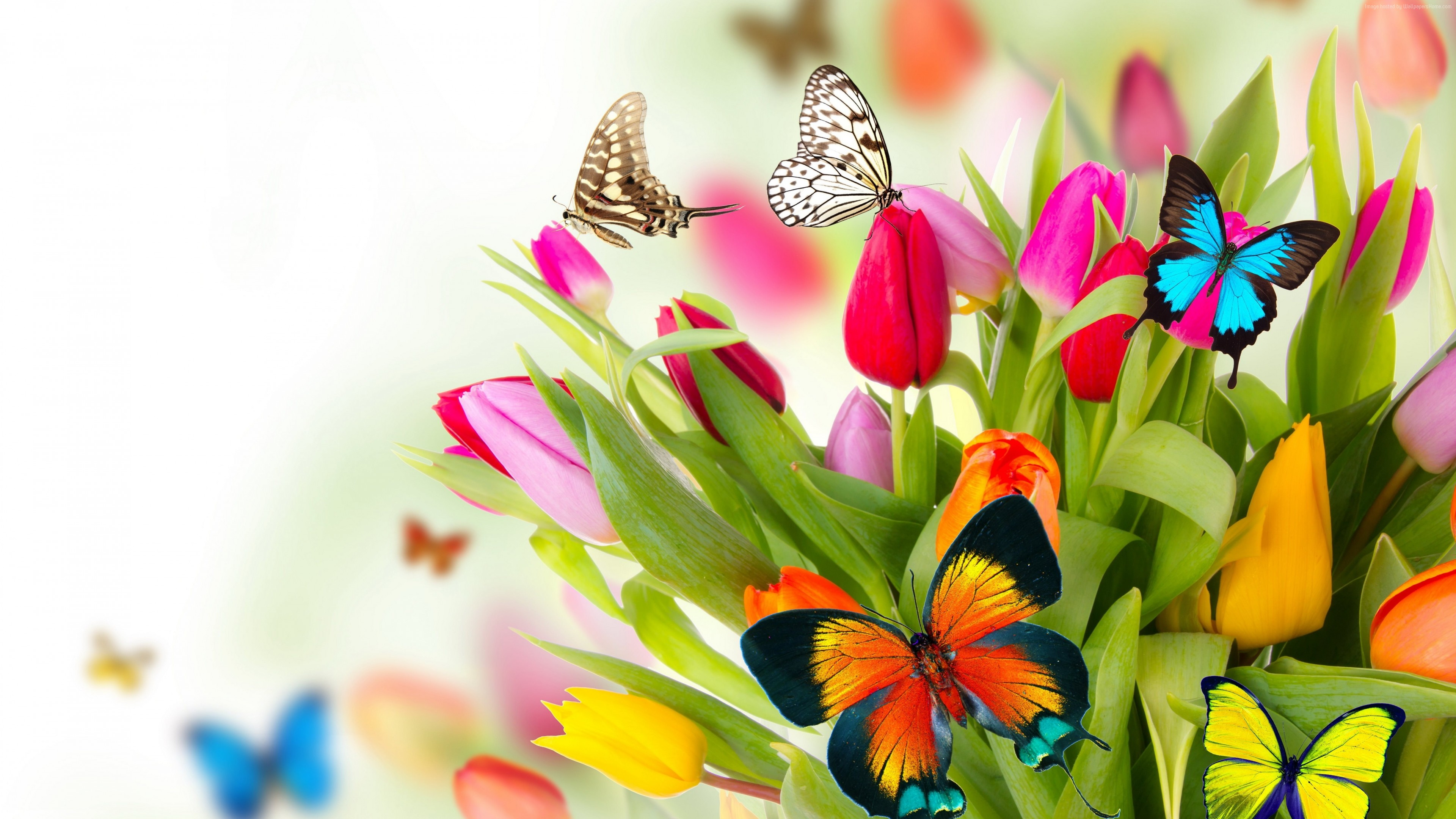 Wallpaper Butterfly Flowers Tulips 4k Animals Wallpaper Download High Resolution 4k Wallpaper