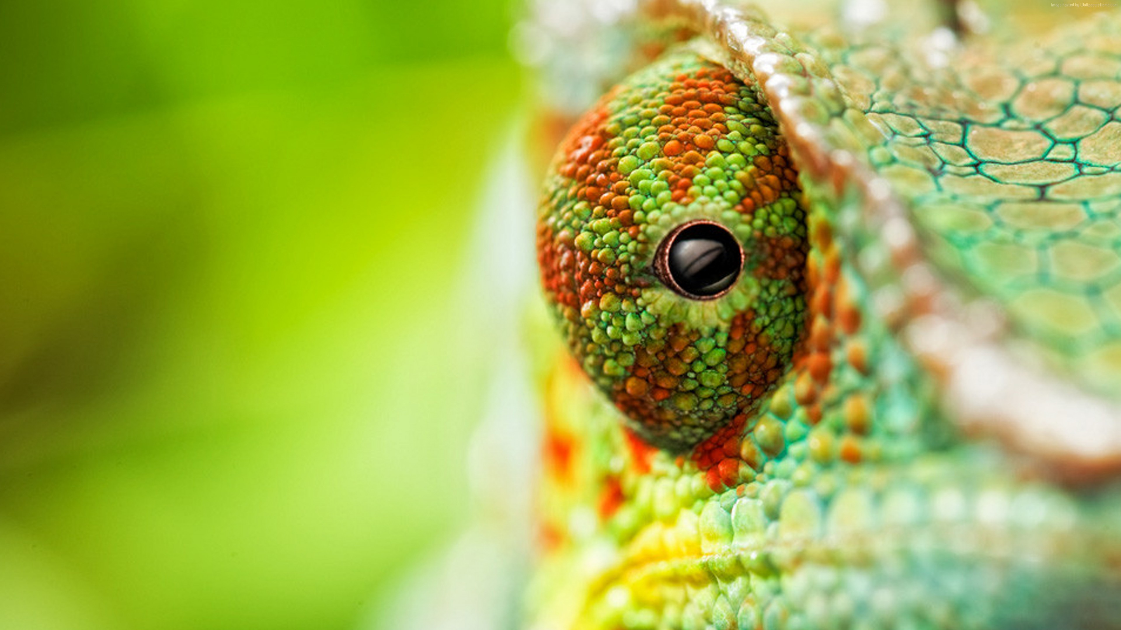 Wallpaper chameleon, eyes, 4k, Animals