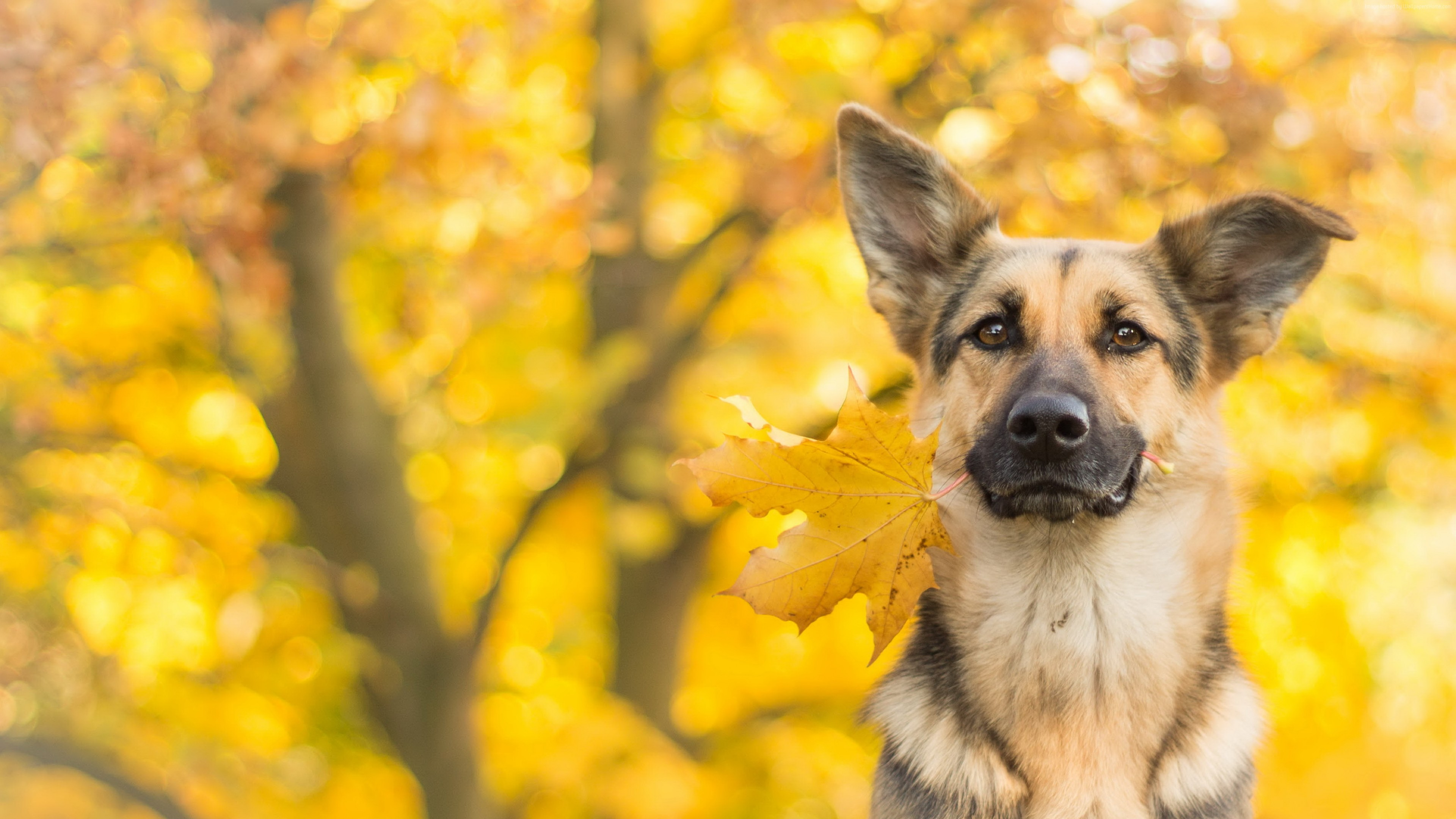 Wallpaper Dog Cute Animals Leaves Autumn 4k Animals Wallpaper Download High Resolution 4k Wallpaper