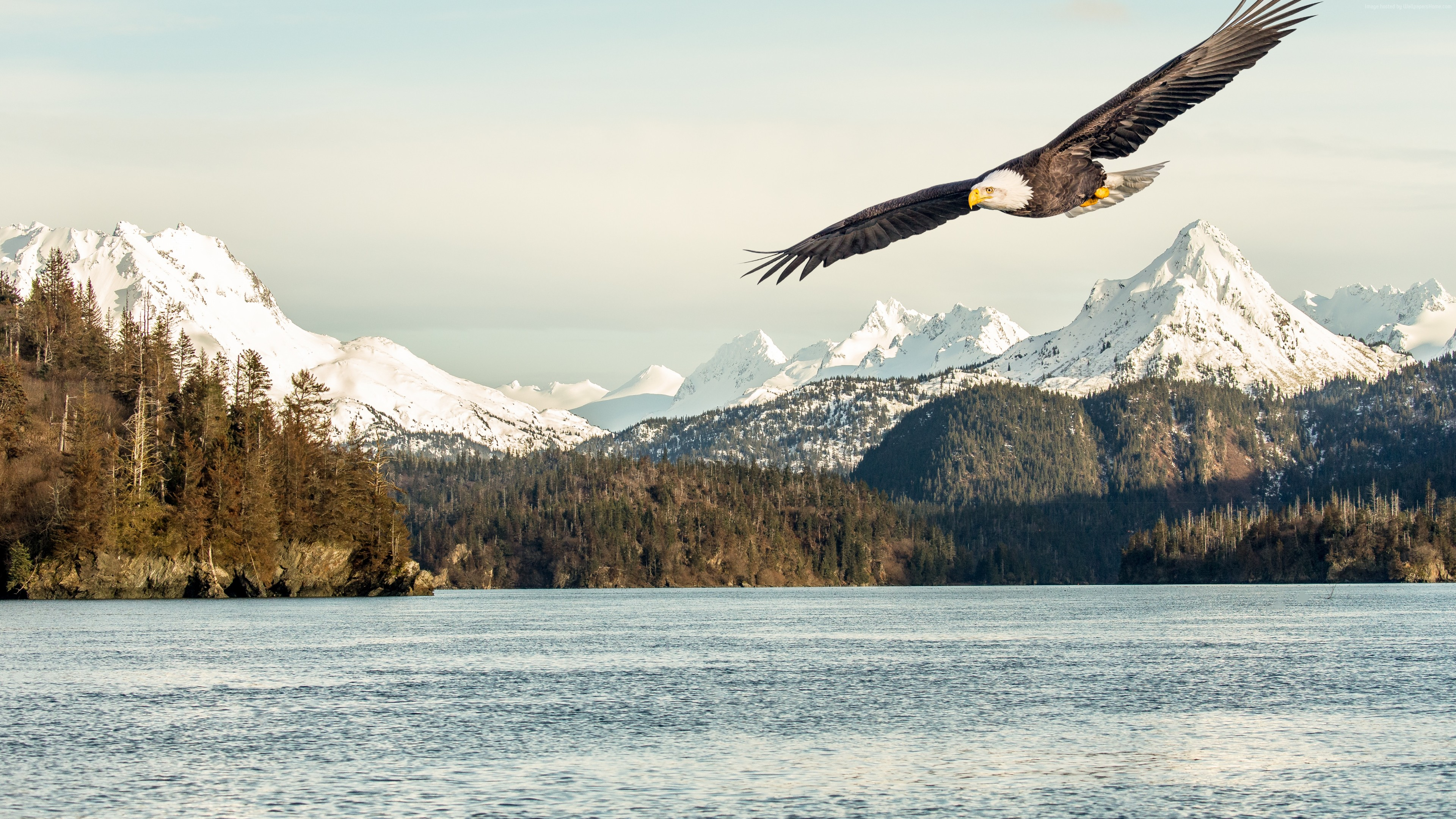 Wallpaper eagle, mountains, lake, 5k, Animals