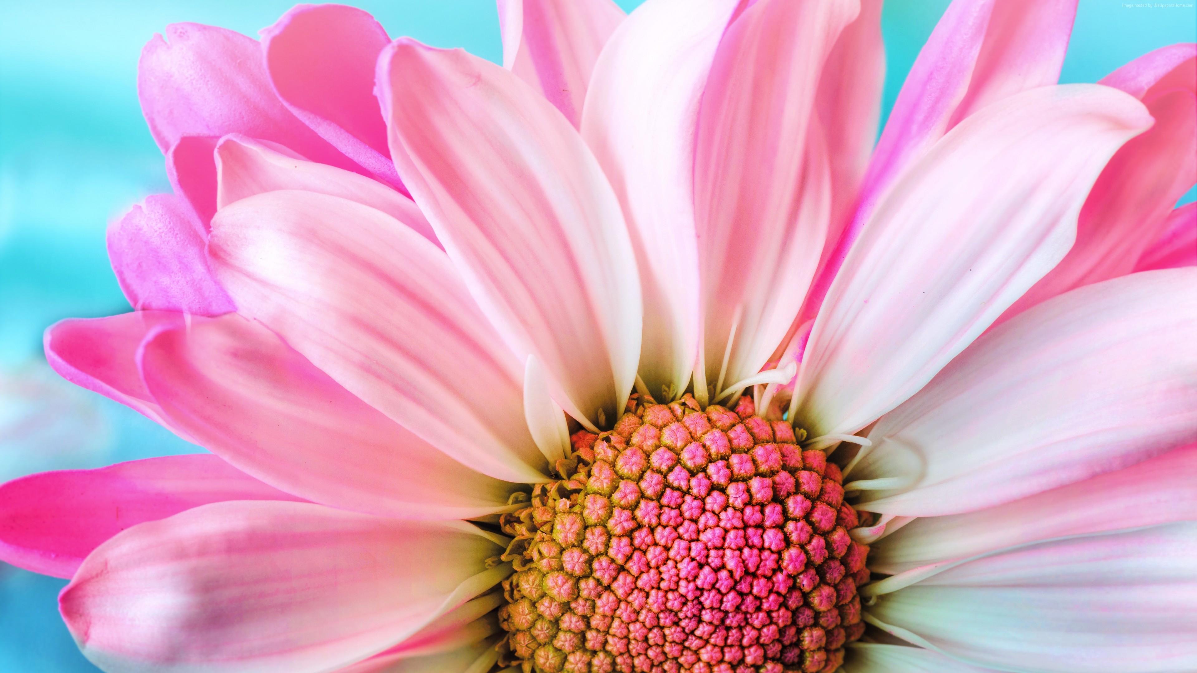 Wallpaper flower, 4k, Nature Wallpaper Download - High ...