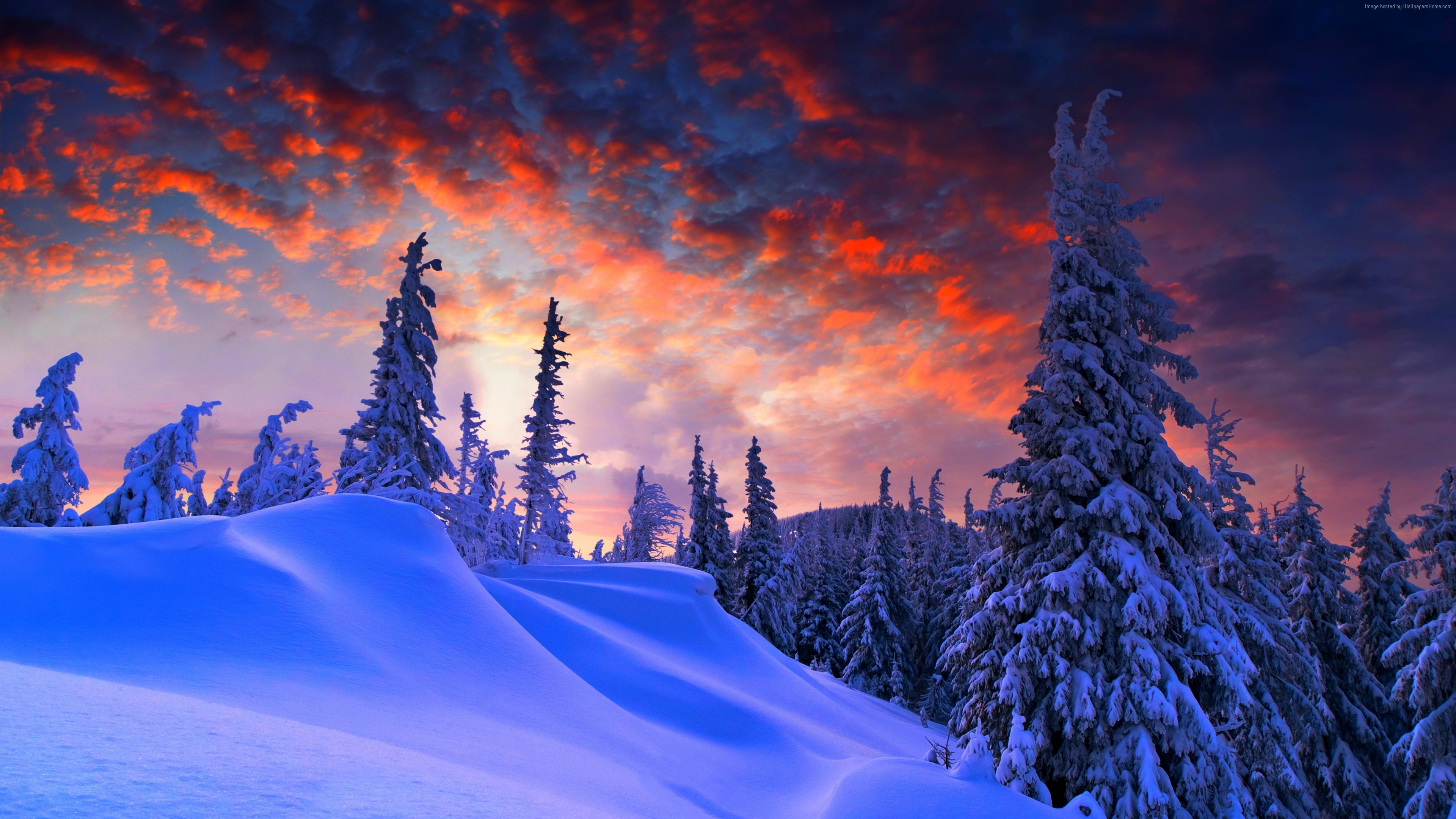Wallpaper forest, snow, winter, sunrise, clouds, 8k, Nature