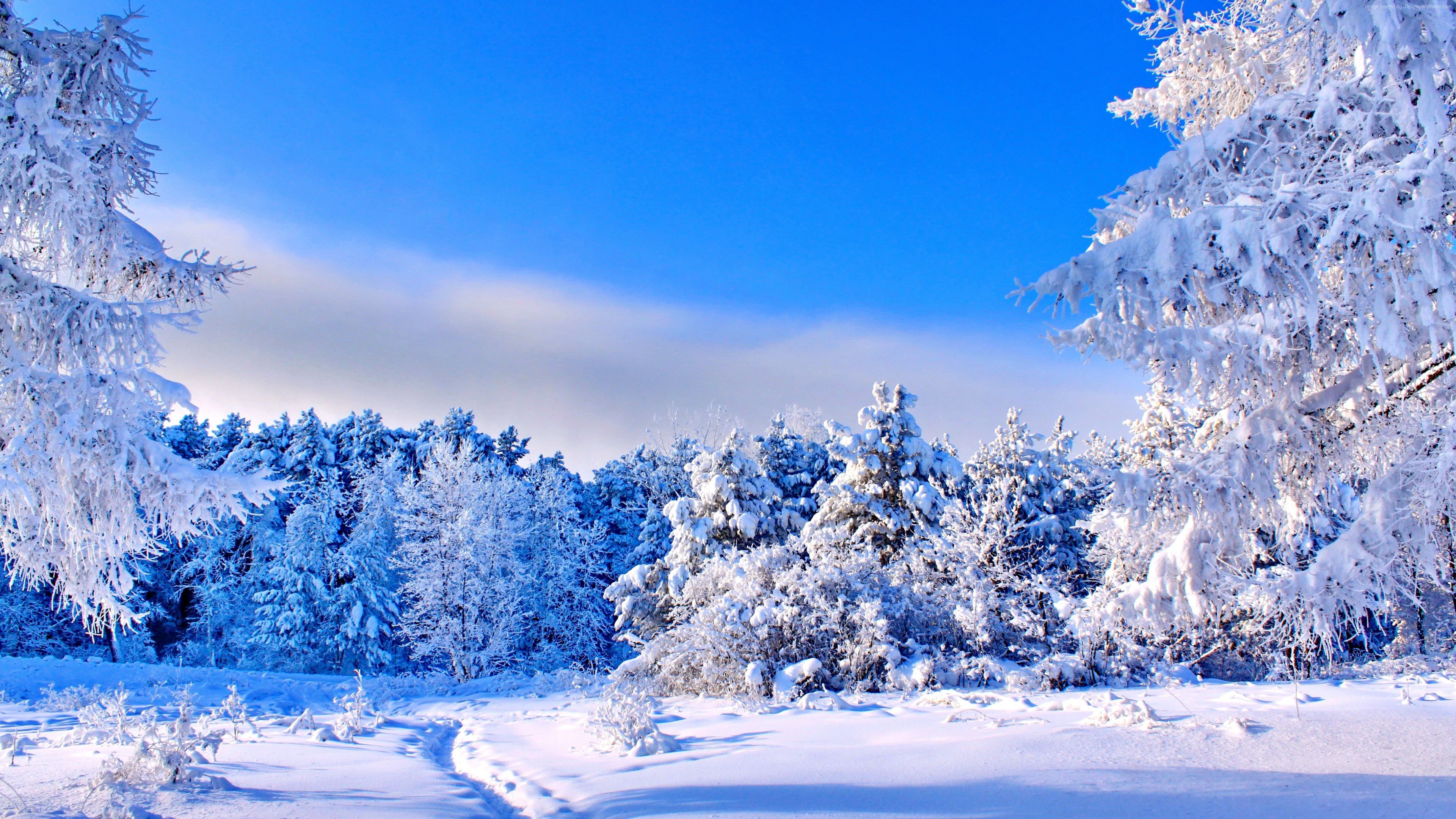 Wallpaper Forest Trees Snow Winter 4k Nature Wallpaper Download High Resolution 4k Wallpaper