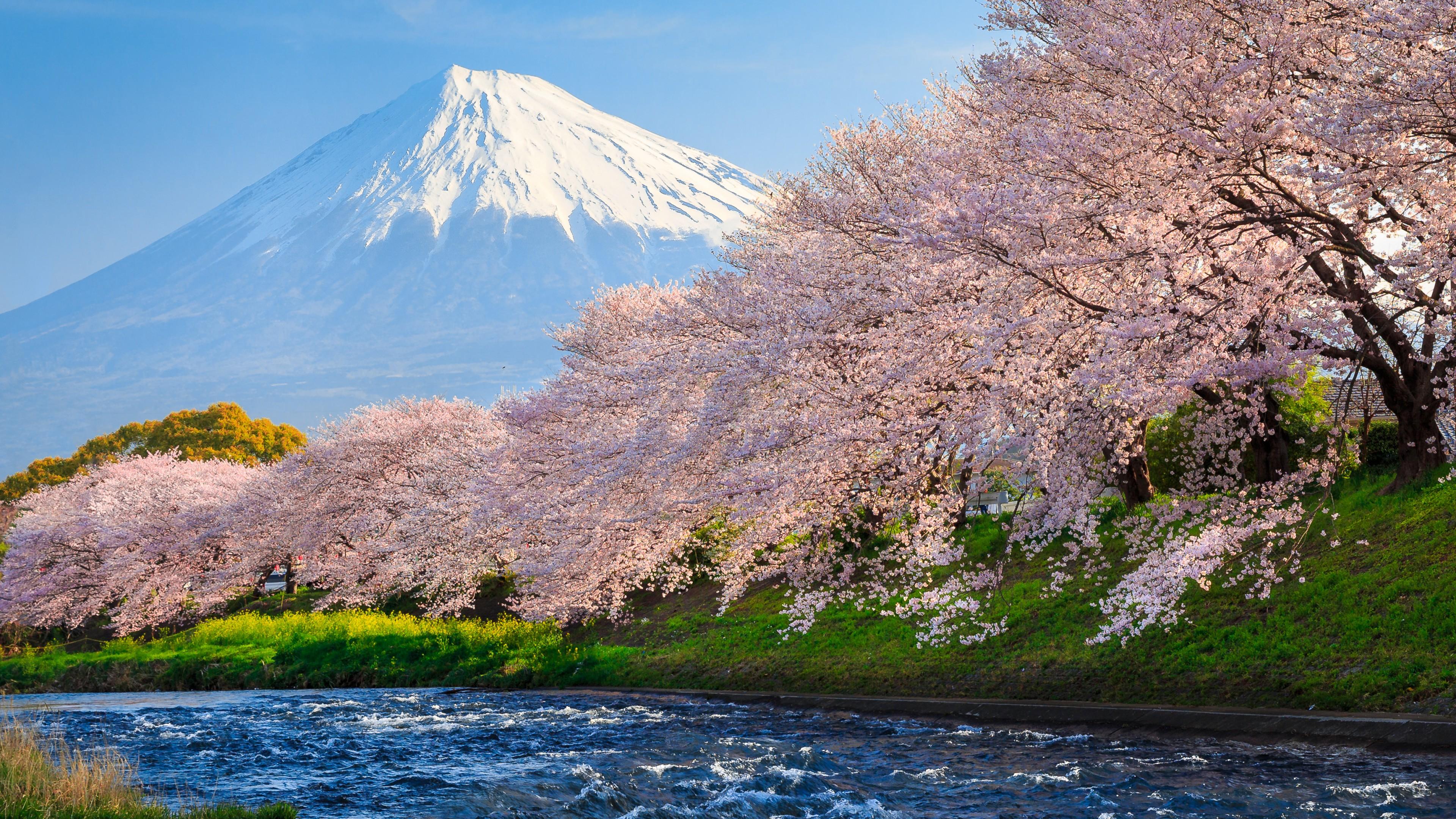Wallpaper Fuji 4k Hd Wallpaper Sakura River Japan