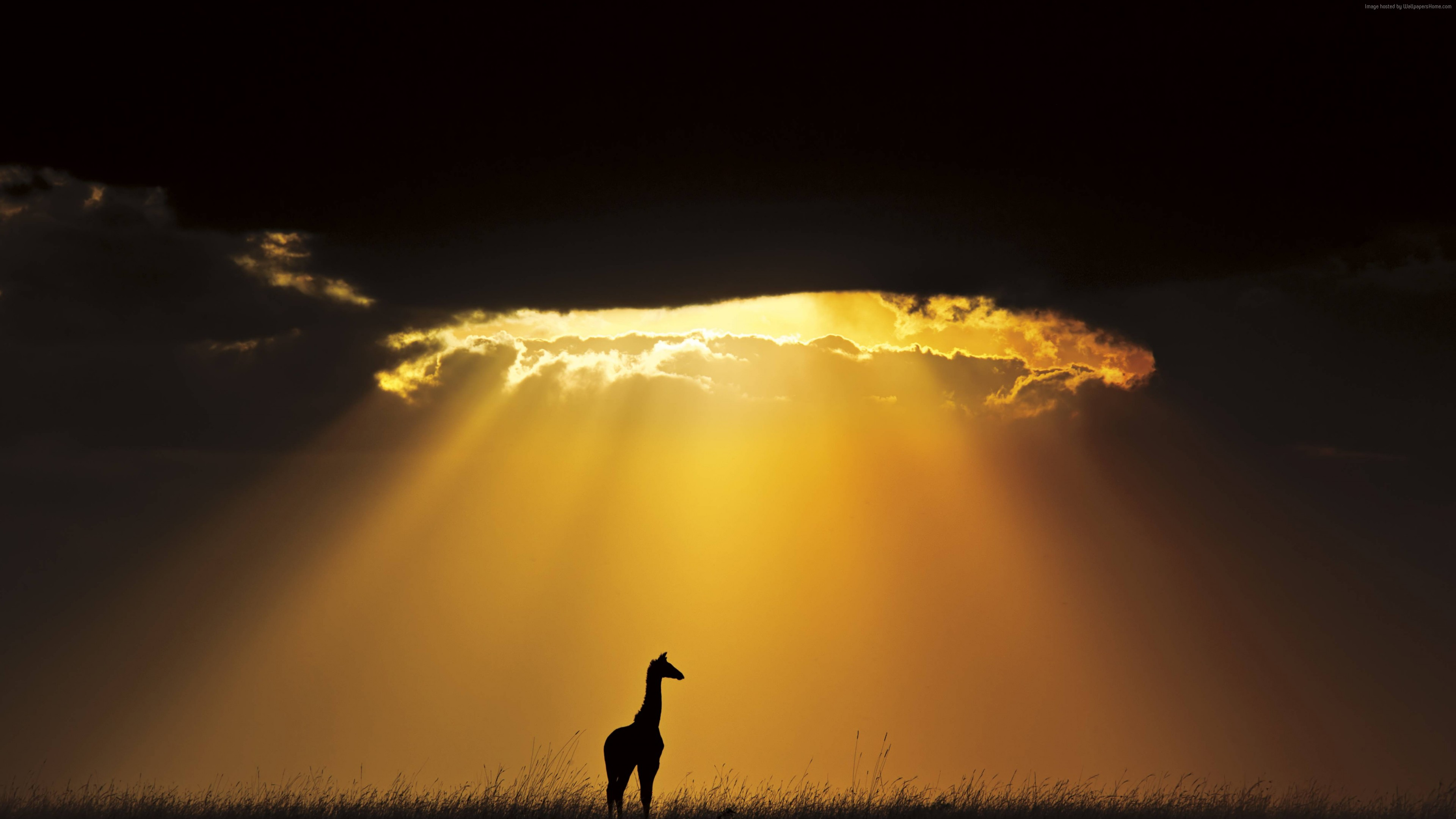 Wallpaper giraffe, sky, landscape, clouds, sun, silhouette, Animals