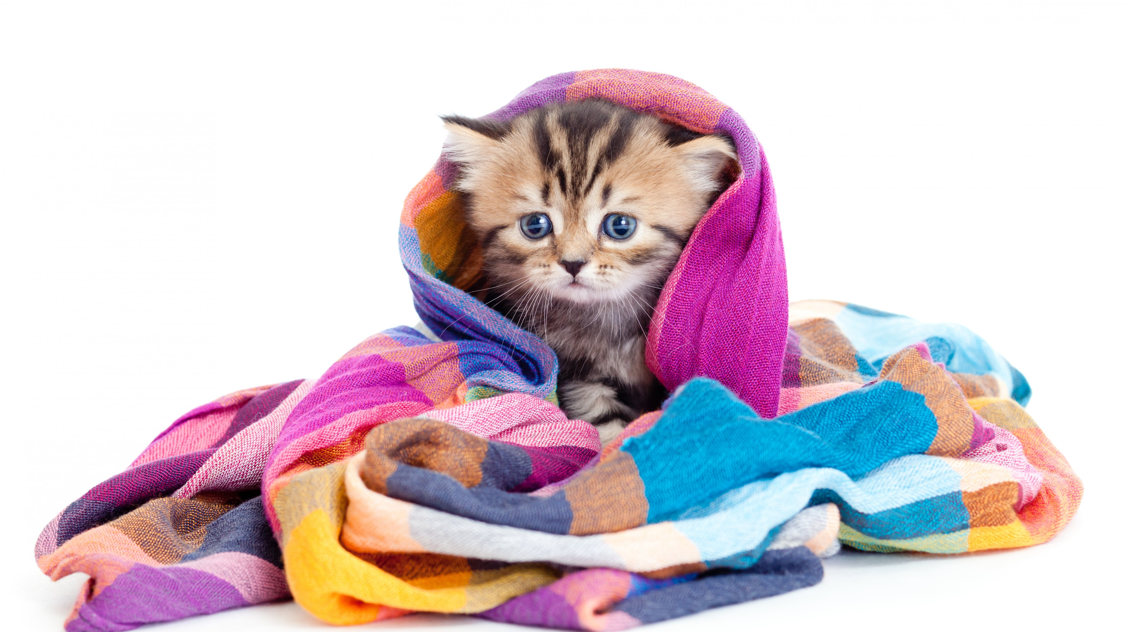 Wallpaper kitten, cute animals, 5k, Animals