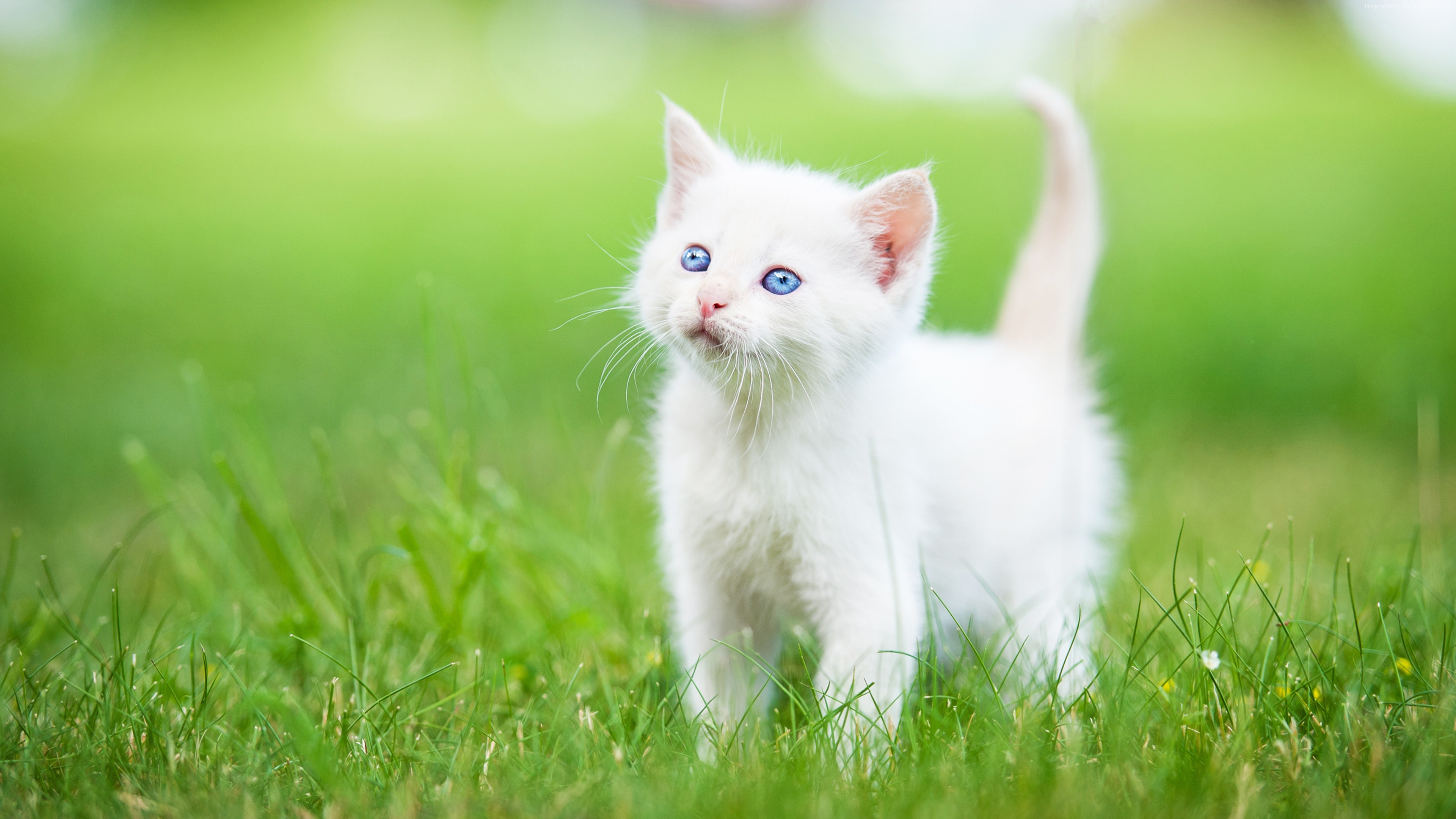 Wallpaper kitten, cute animals, grass, 5k, Animals