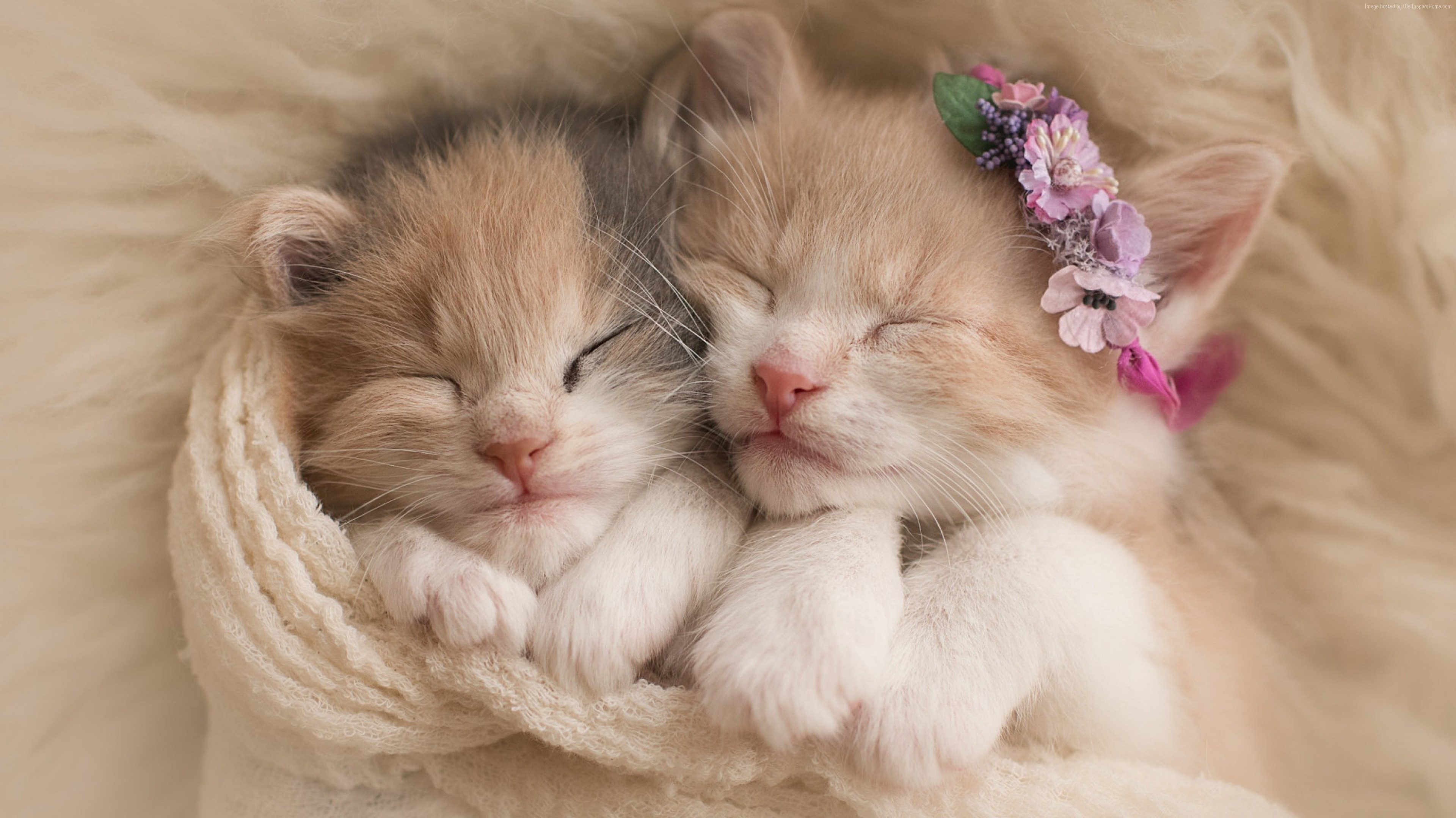 Wallpaper kittens, cats, cute, Animals