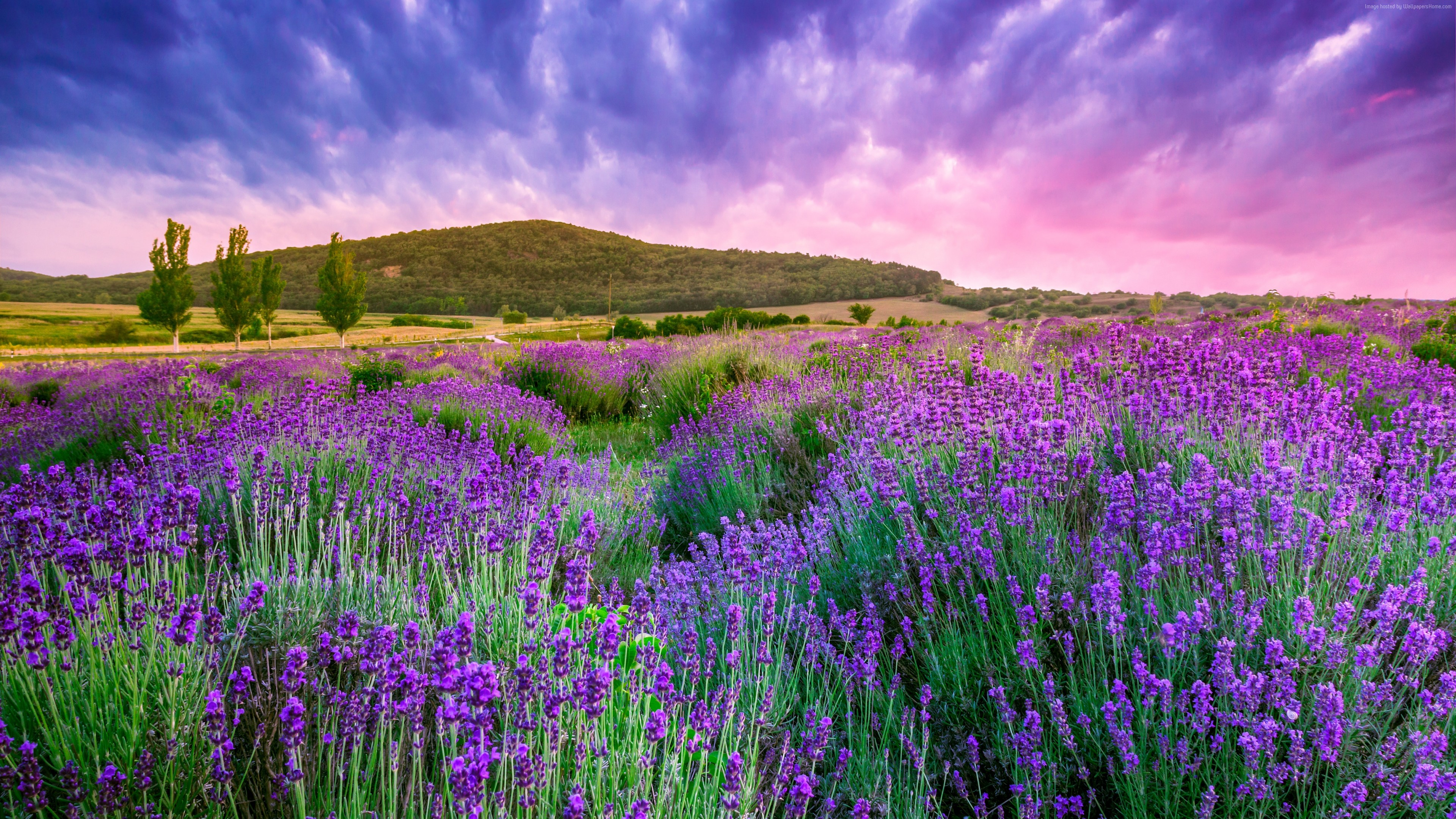 Wallpaper lavender, field, sky, mountain, Provence, France, Europe, 4k, Travel