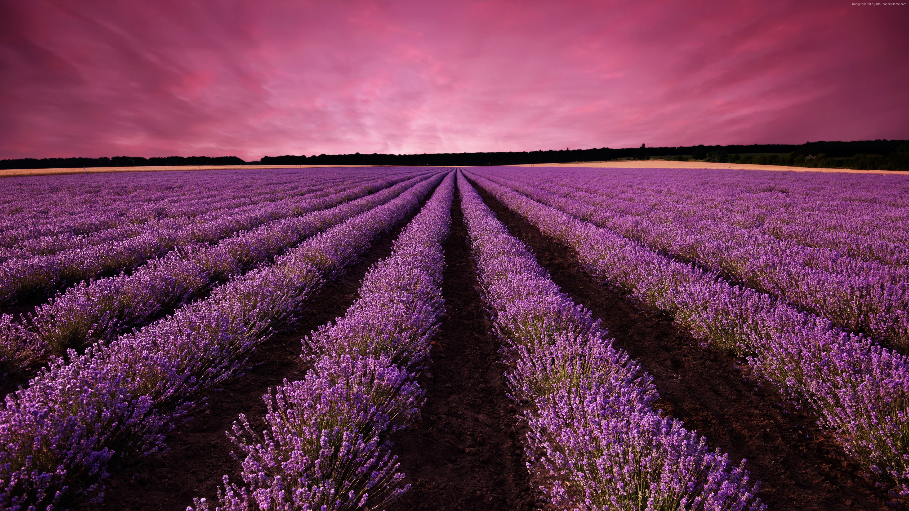 Wallpaper lavender, field, sky, mountain, Provence, France, Europe, 5k, Nature