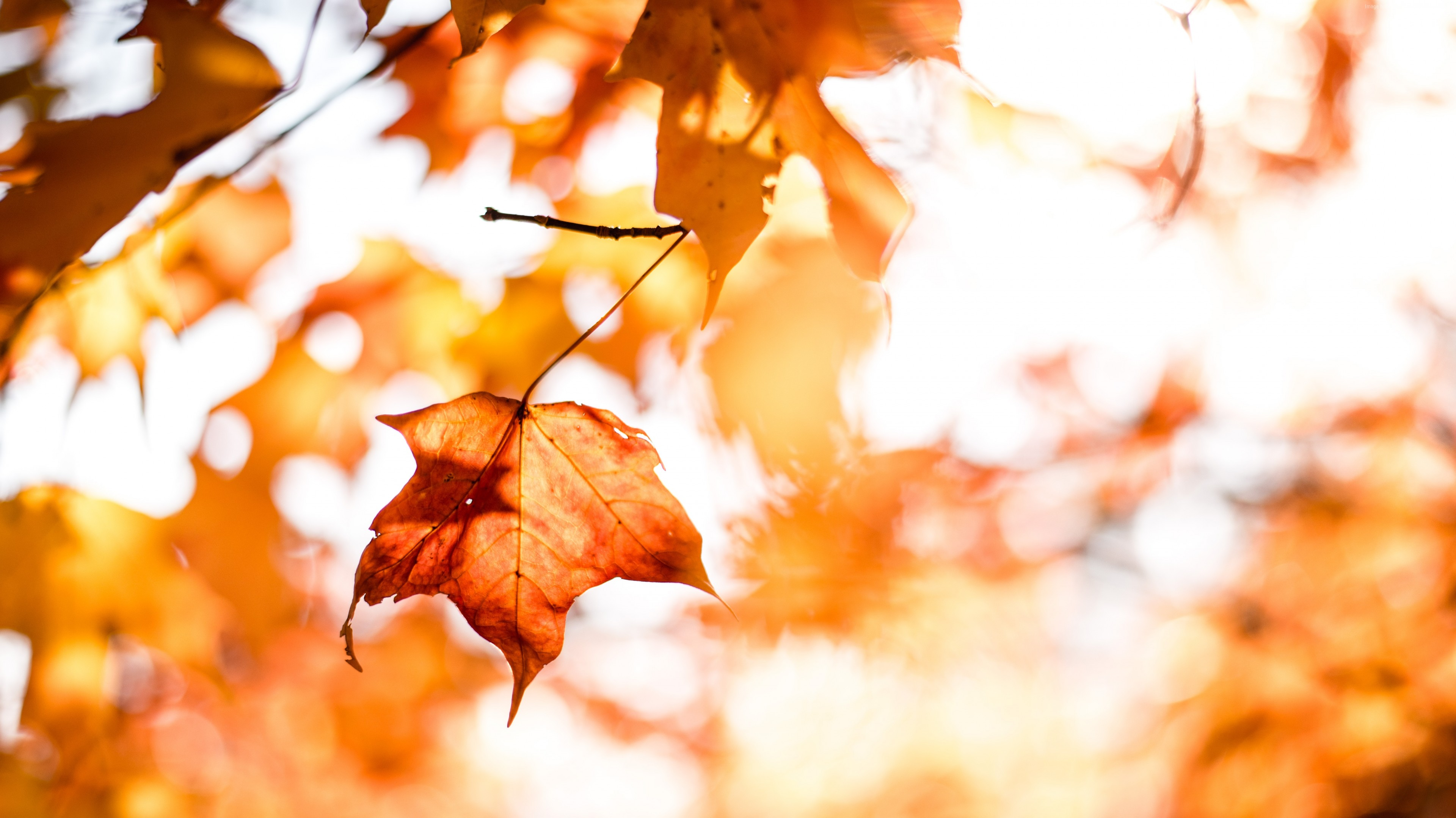 Wallpaper Leaves Autumn Orange 5k Nature Download