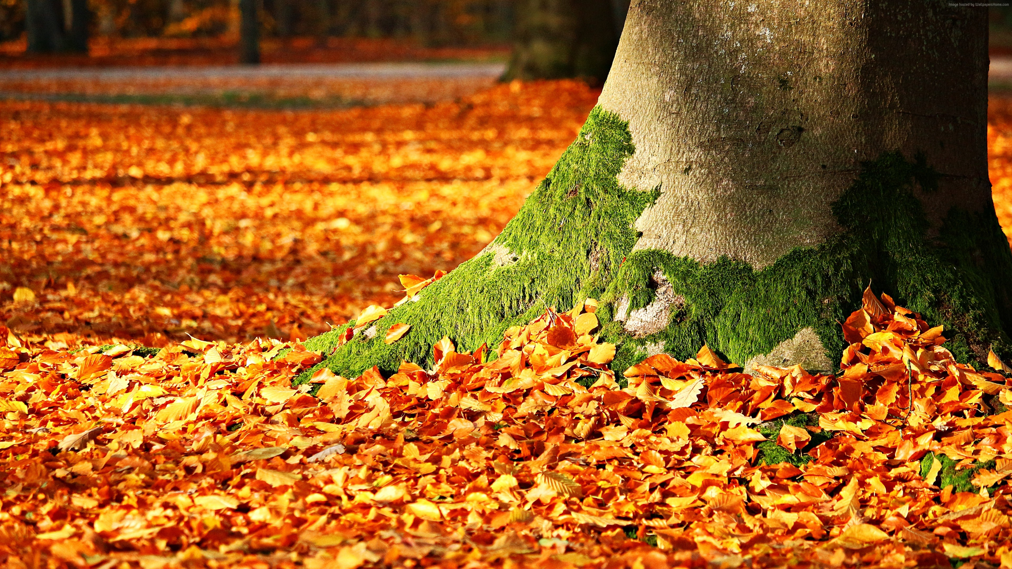 Wallpaper leaves, tree, autumn, 5k, Nature