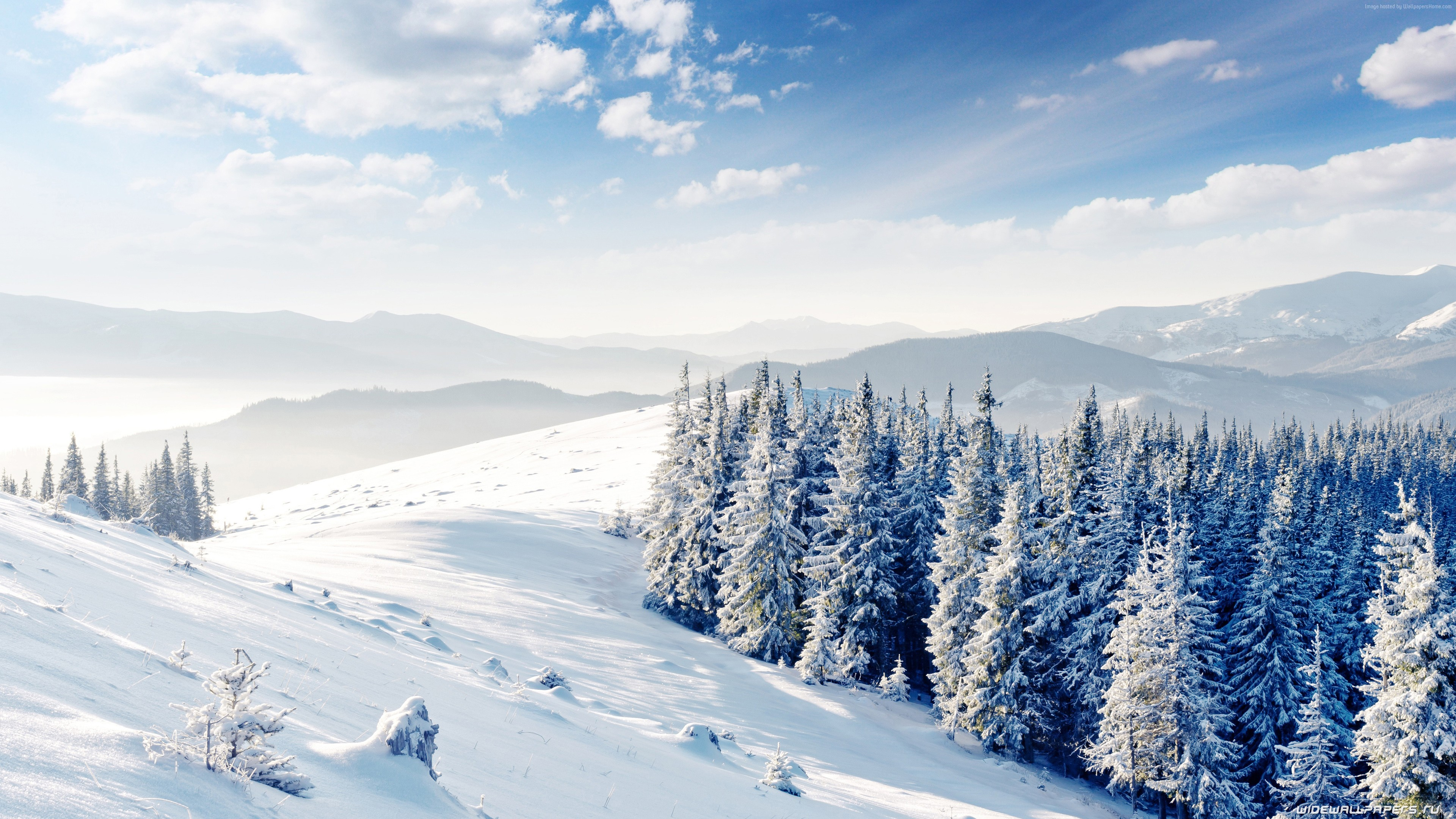 Wallpaper mountains, forest, trees, snow, winter, 4k, Nature