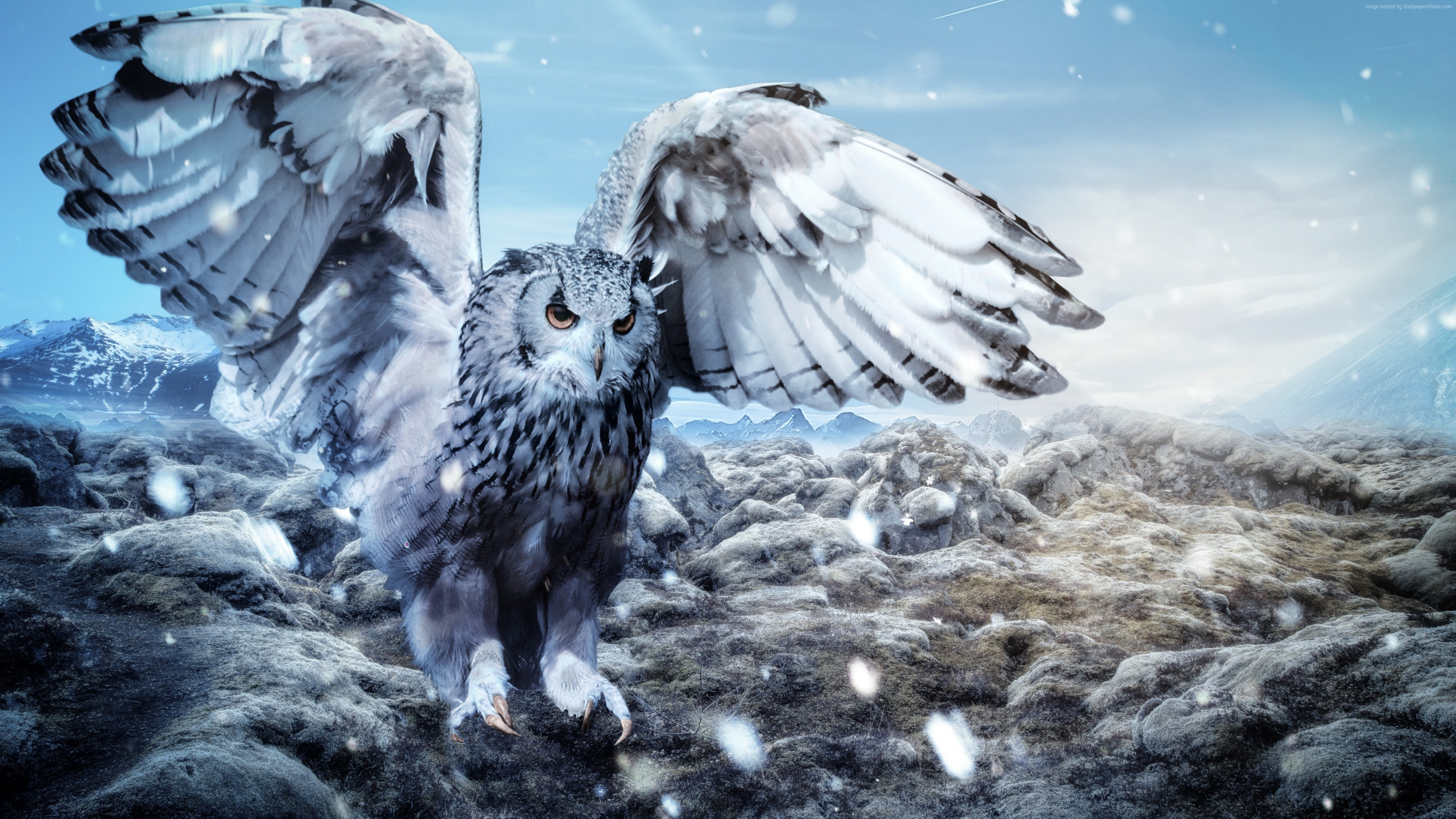 Wallpaper owl, mountains, snow, winter, 5k, Animals