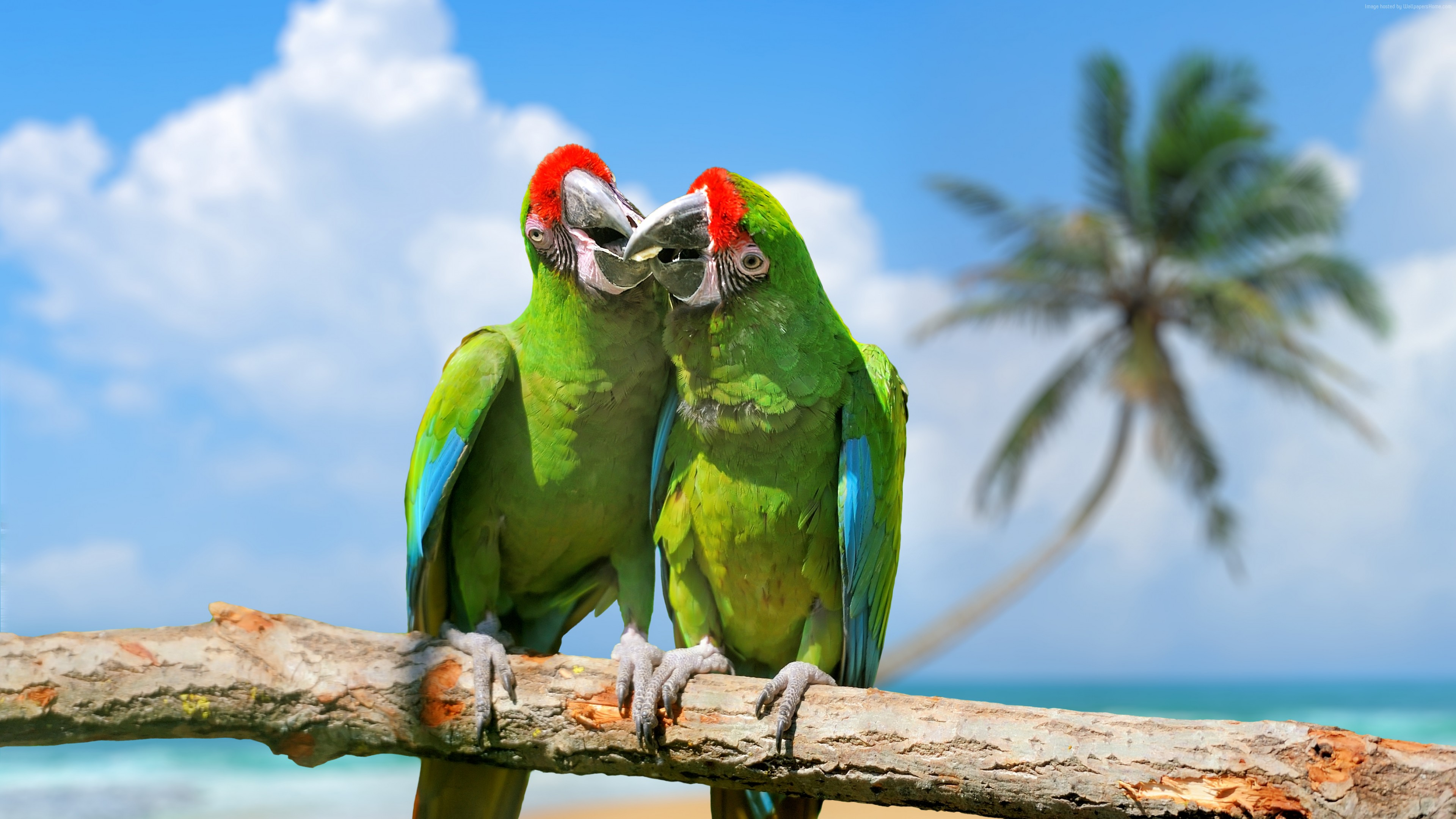Wallpaper parrot, plumage, branch, exotic birds, green, Animals