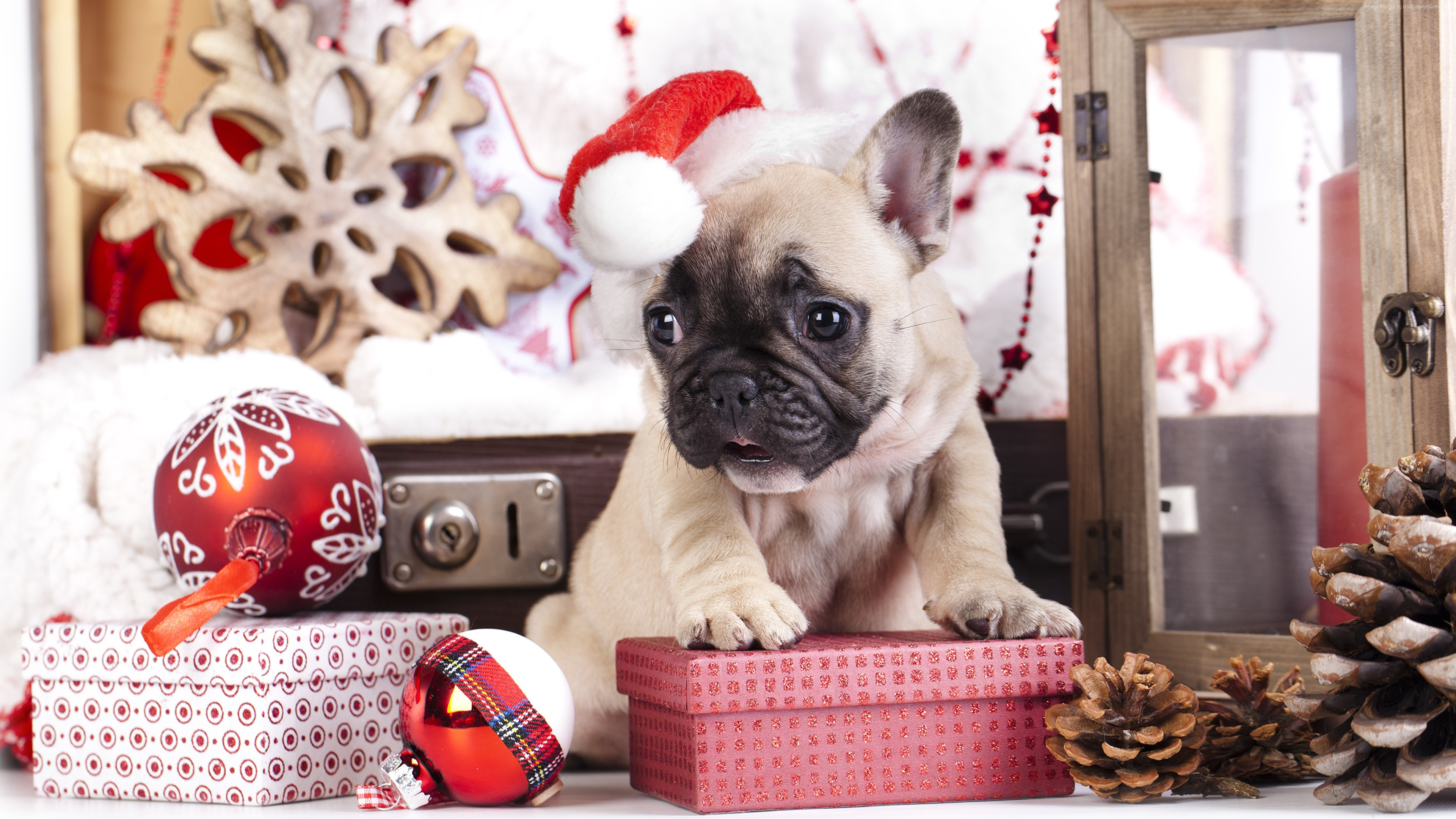 Wallpaper puppy, cute animals, Christmas, New Year, 4k, Holidays