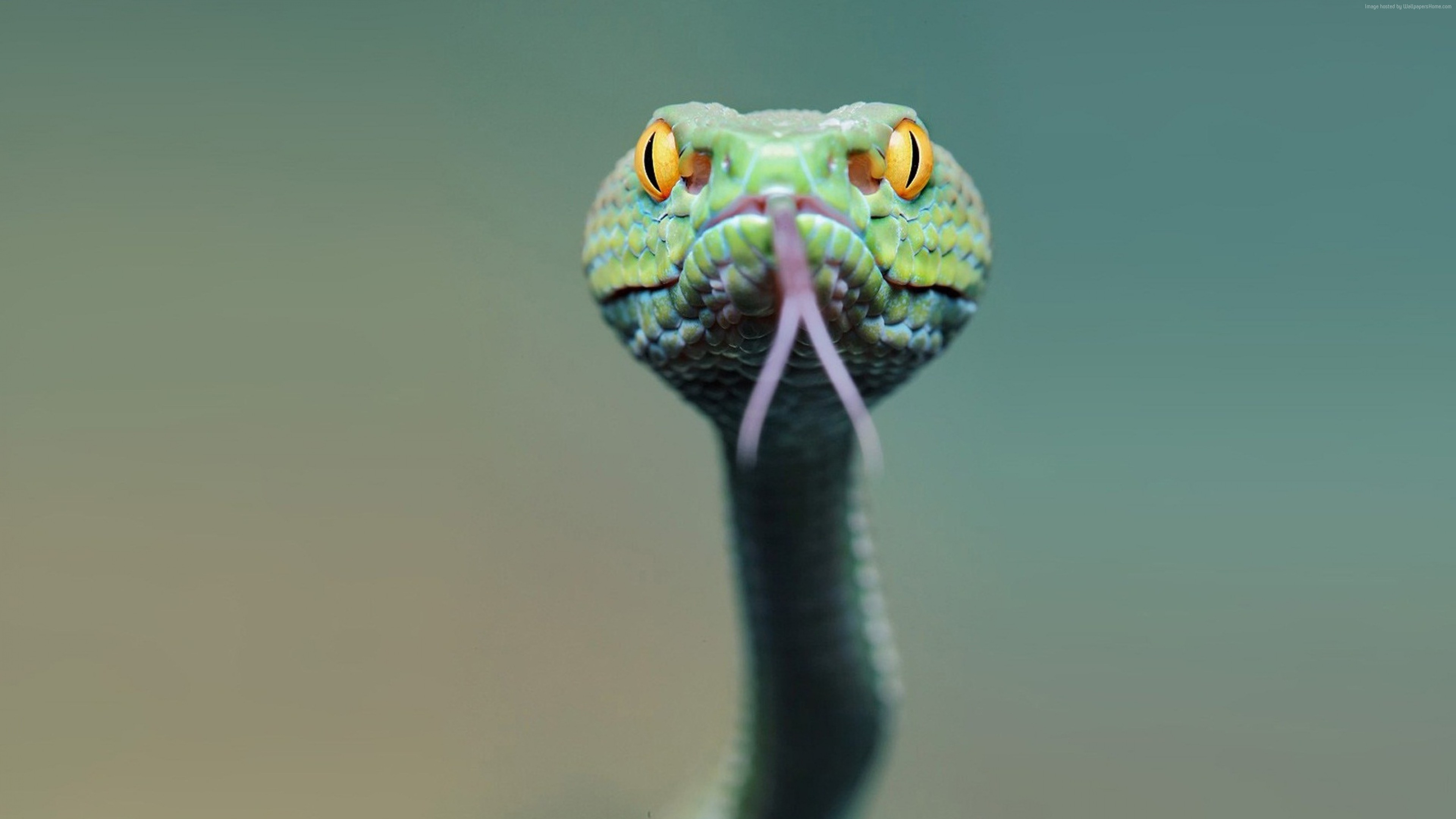 Wallpaper snake, green, 4k, Animals