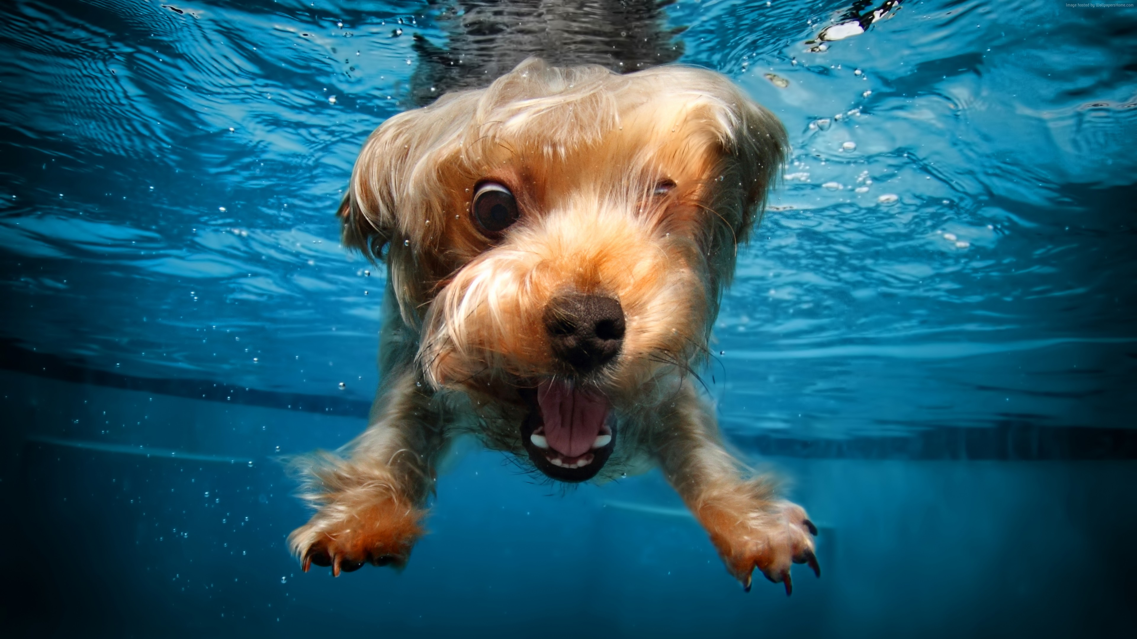 Wallpaper terrier, dog, underwater, cute animals, funny, Animals
