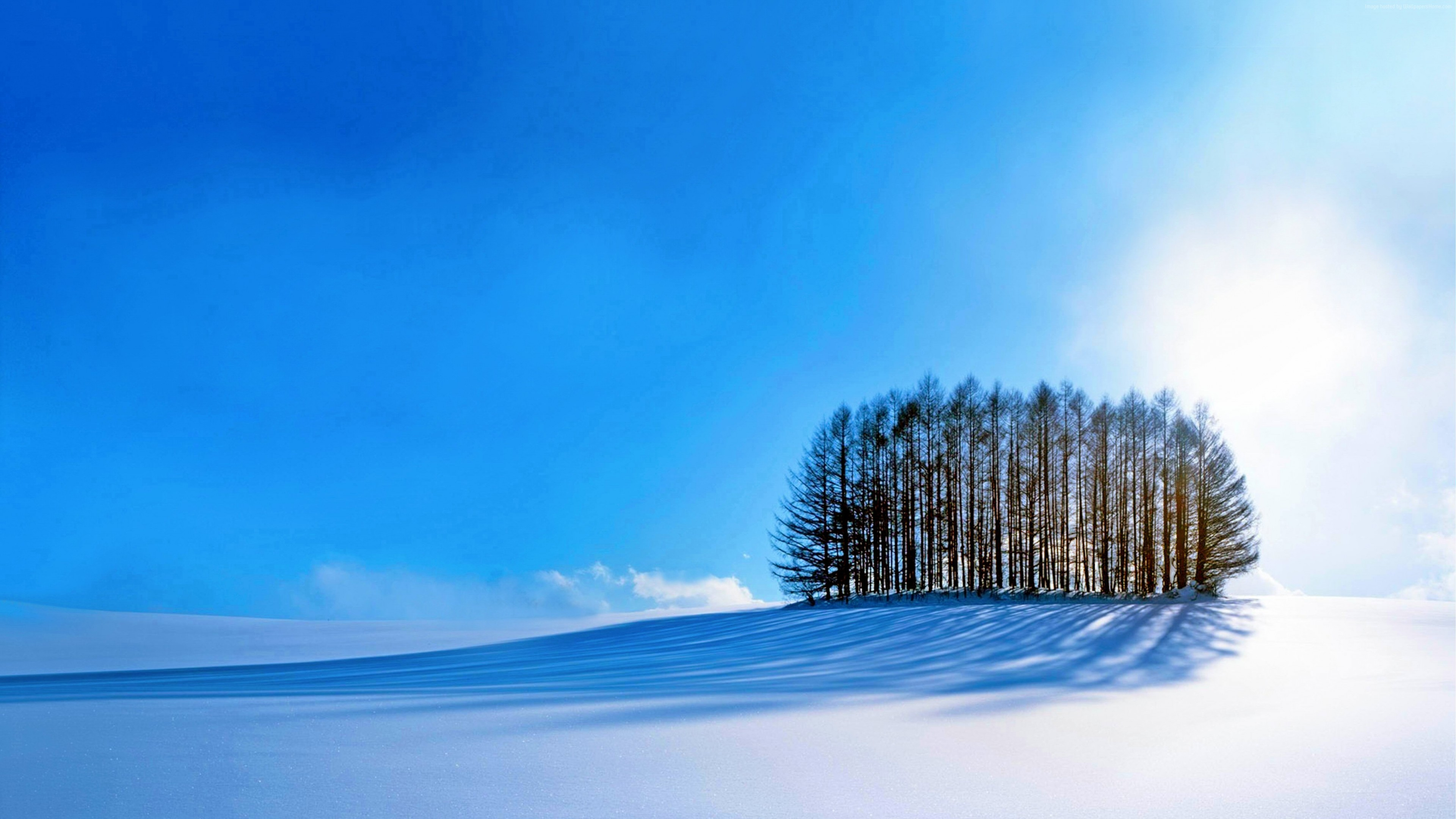 Wallpaper Trees Sky Snow Winter 4k Nature Wallpaper Download High Resolution 4k Wallpaper