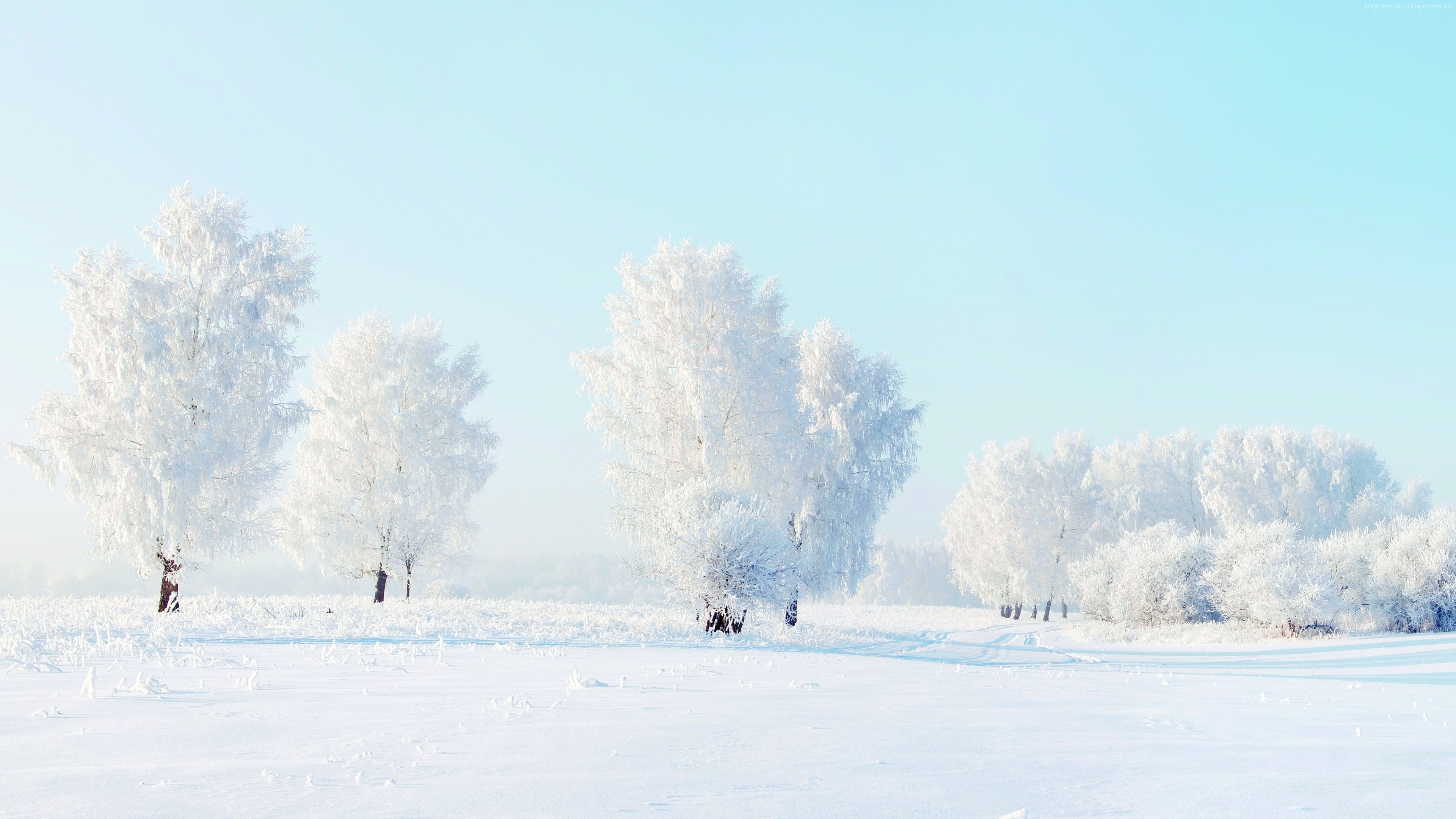 Wallpaper Trees Snow Winter 4k Nature Wallpaper Download High Resolution 4k Wallpaper