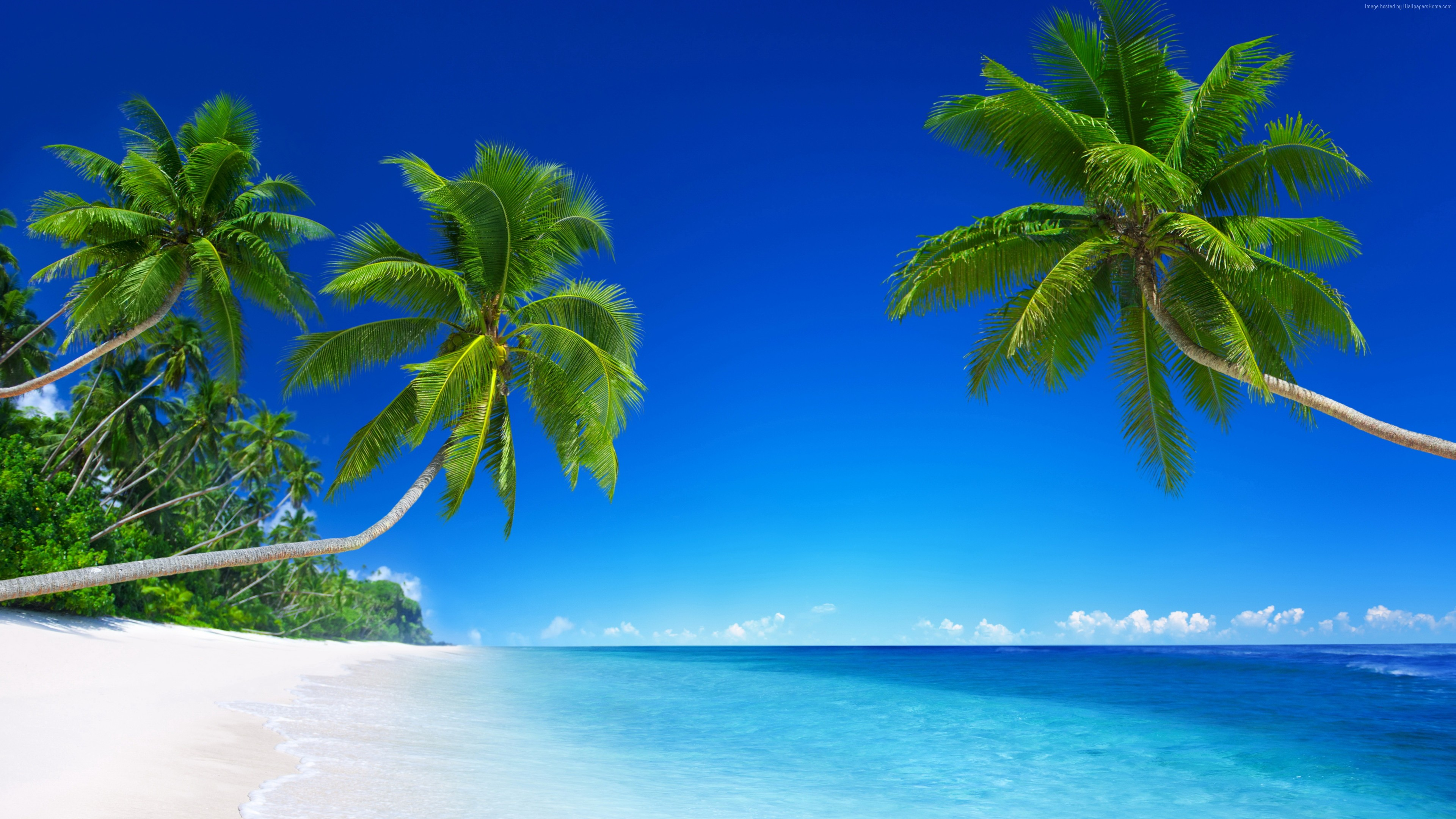 Wallpaper Tropical Beach 5k 4k 8k Paradise Palms Sea Blue