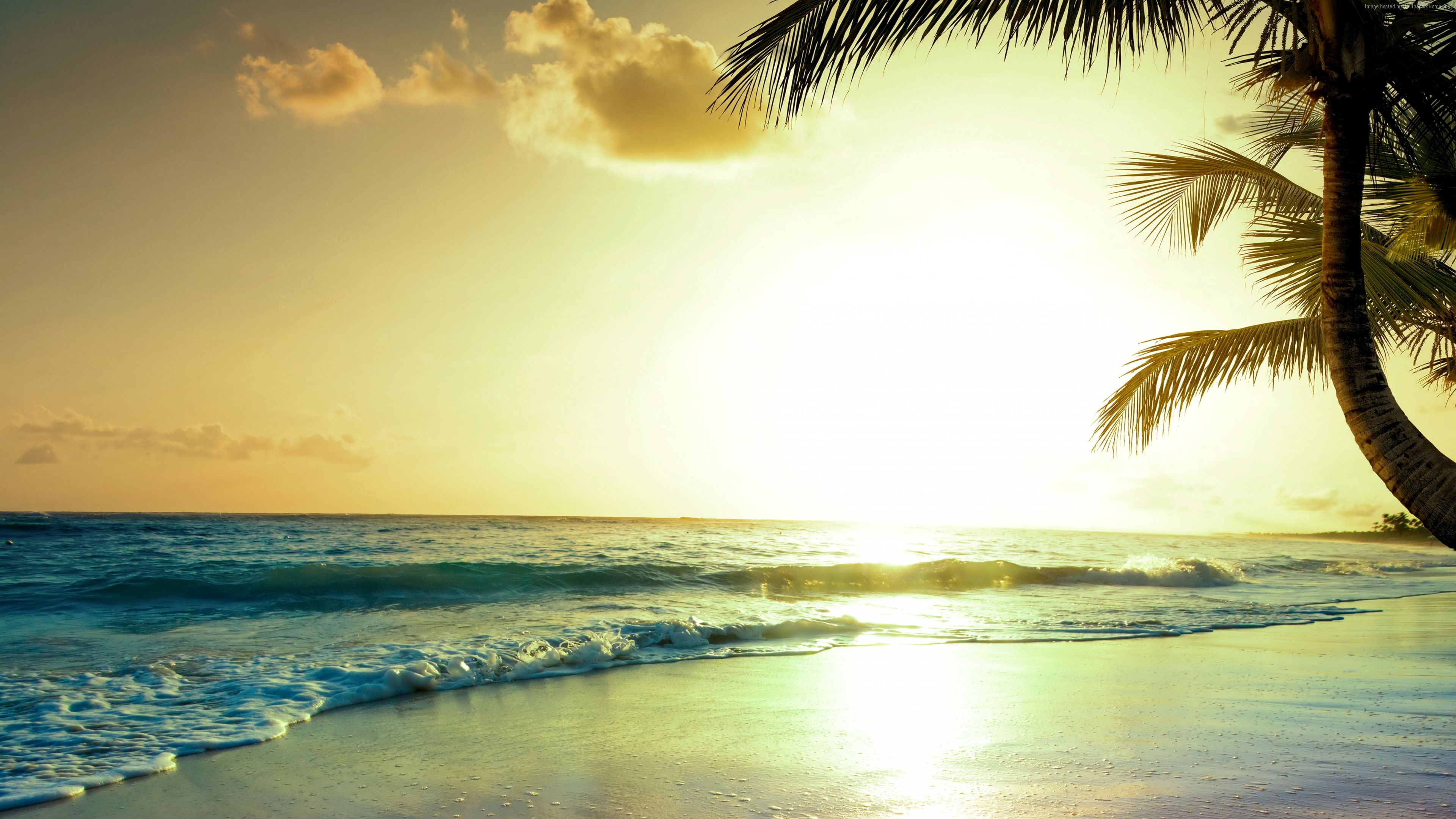 Wallpaper Tropical Beach 5k 4k Wallpaper Paradise Sunset