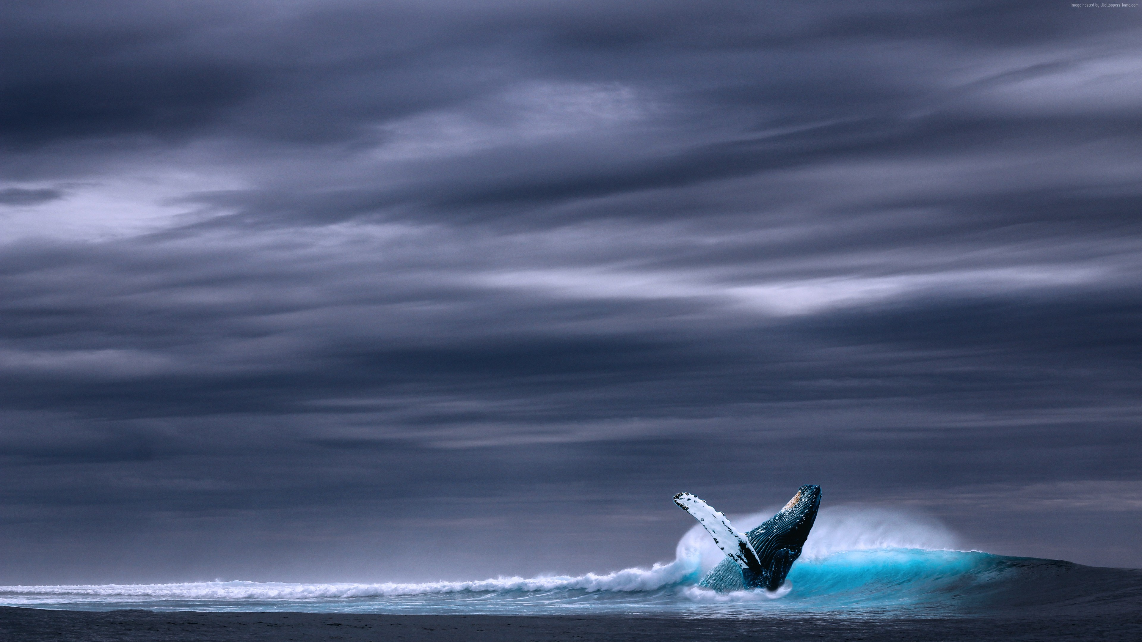 Wallpaper whale, ocean, sky, 5k, Animals