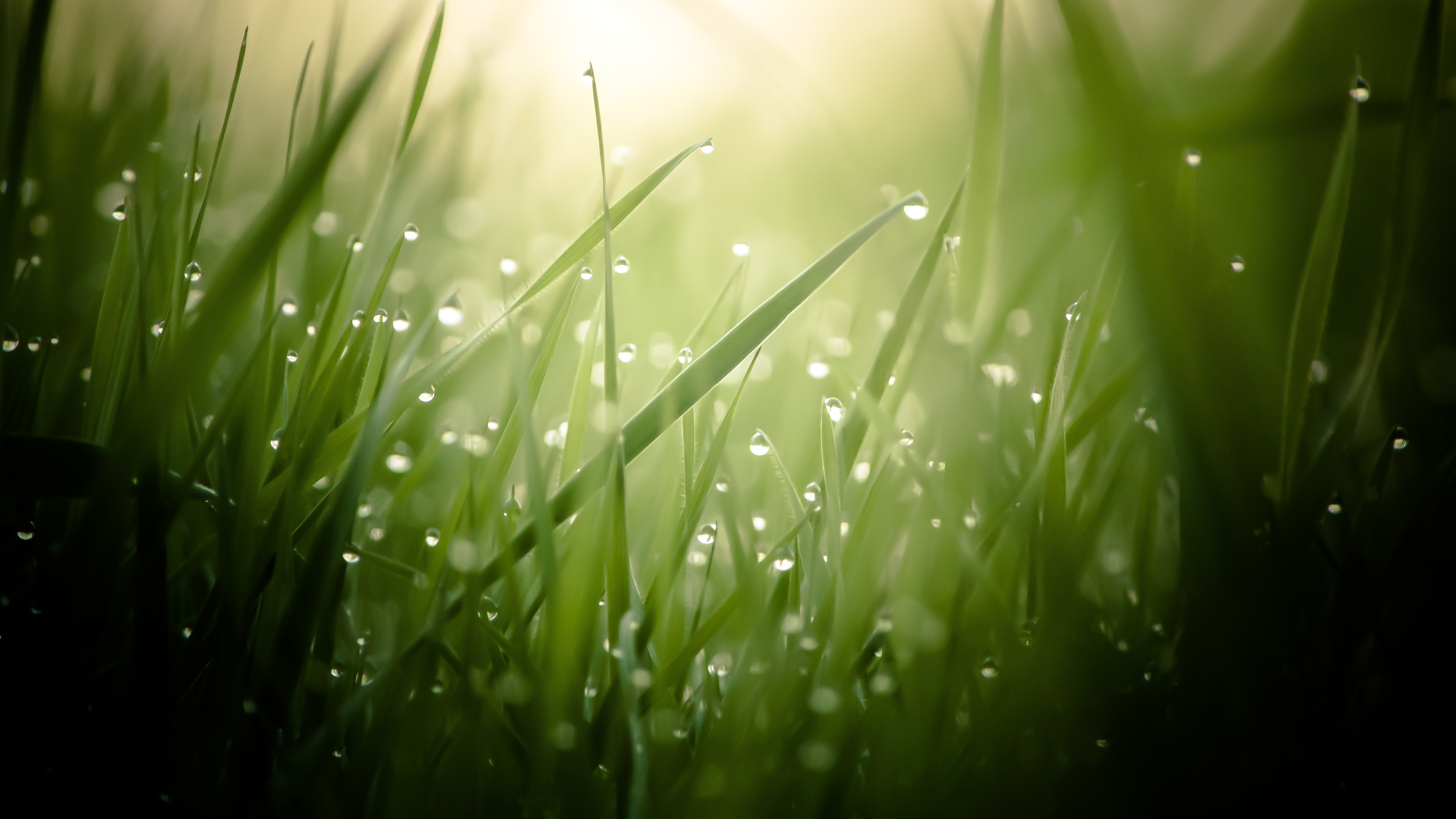 Morning Dew On Grass Threads 4K Ultra HD Desktop