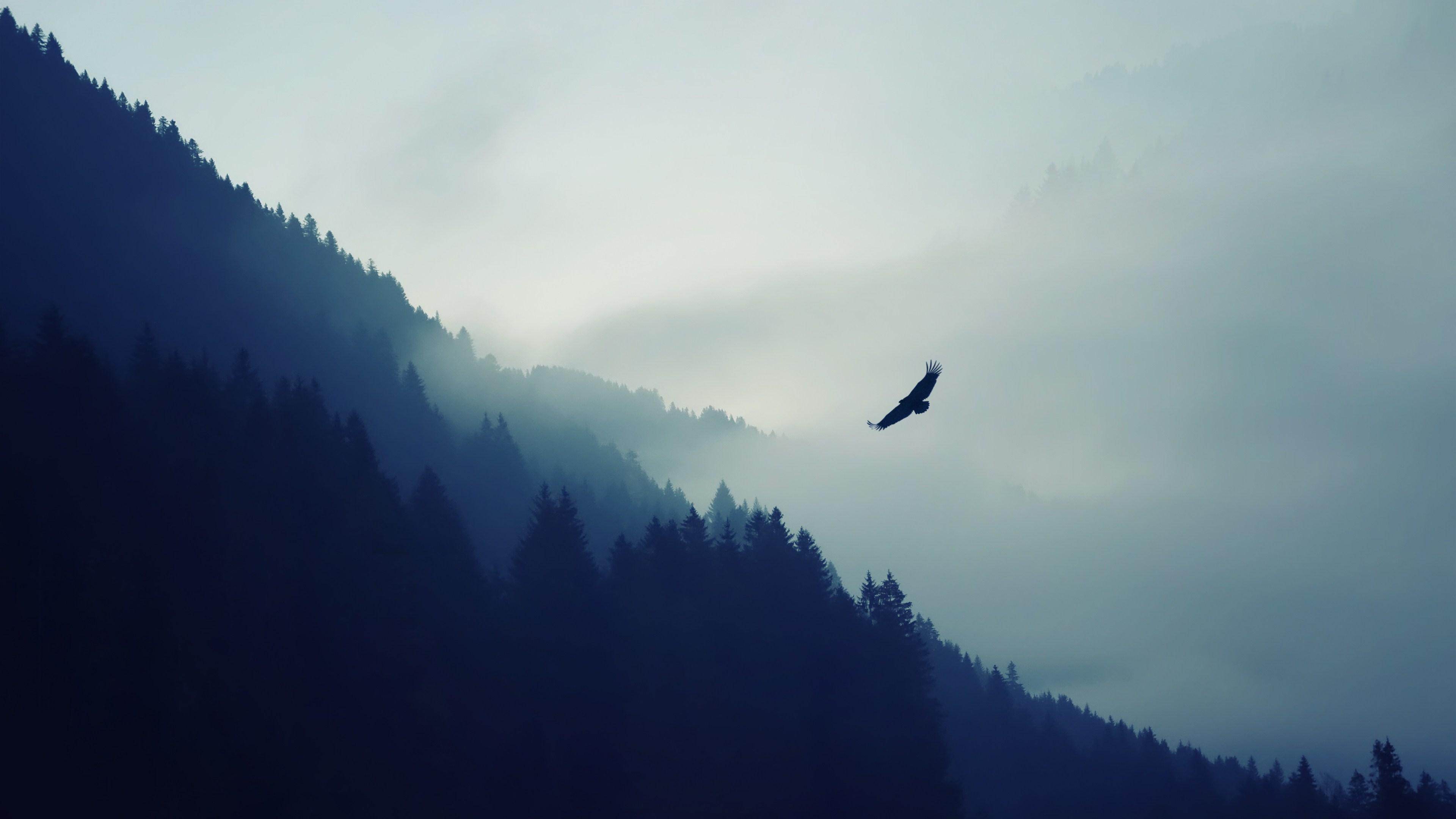 Mountain Forest Fog Valley Eagle 4K Ultra HD Desktop Wallpaper