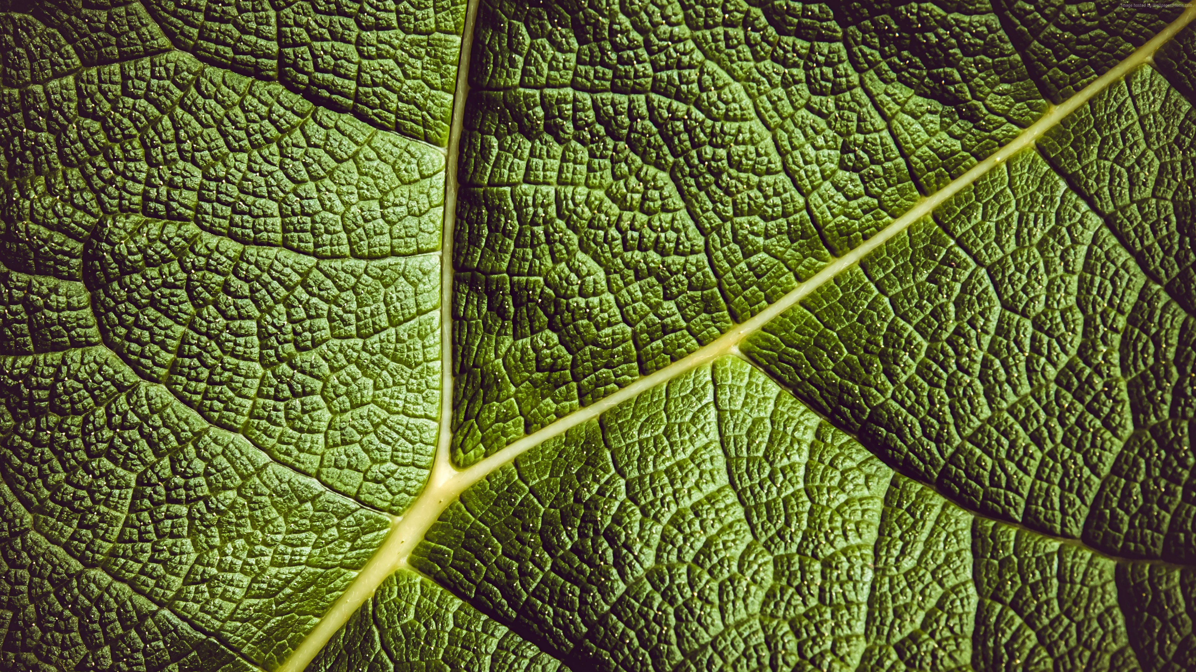 Stock Images leaf, green, 5K, Stock Images