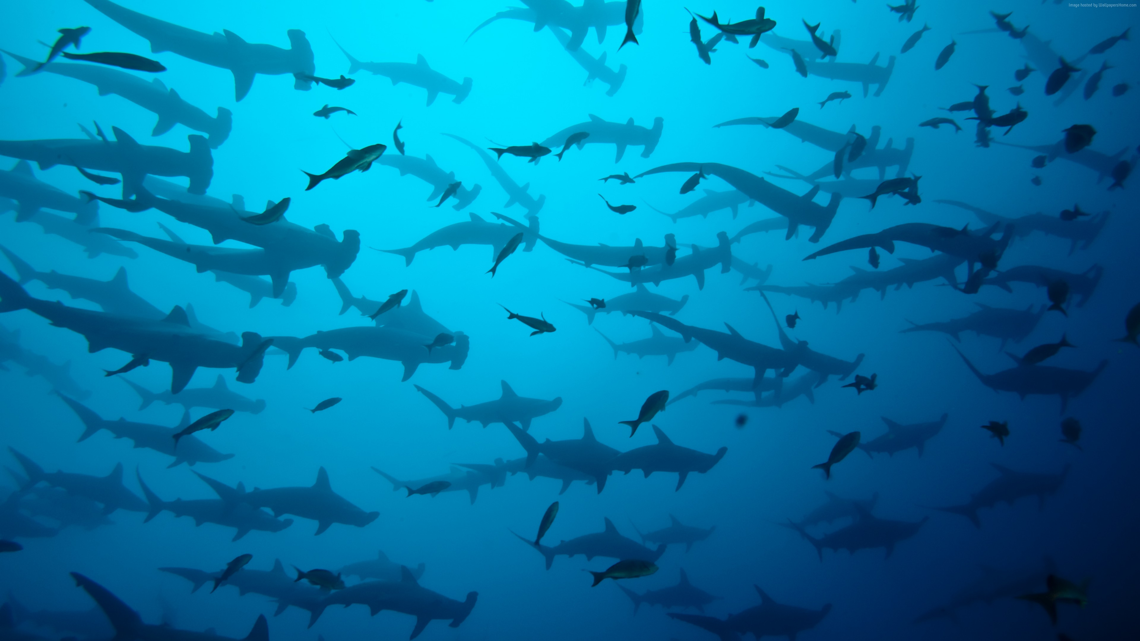 Wallpaper 5k, 4k, Cocos Island, Costa Rica, underwater, diving, sharks, OS
