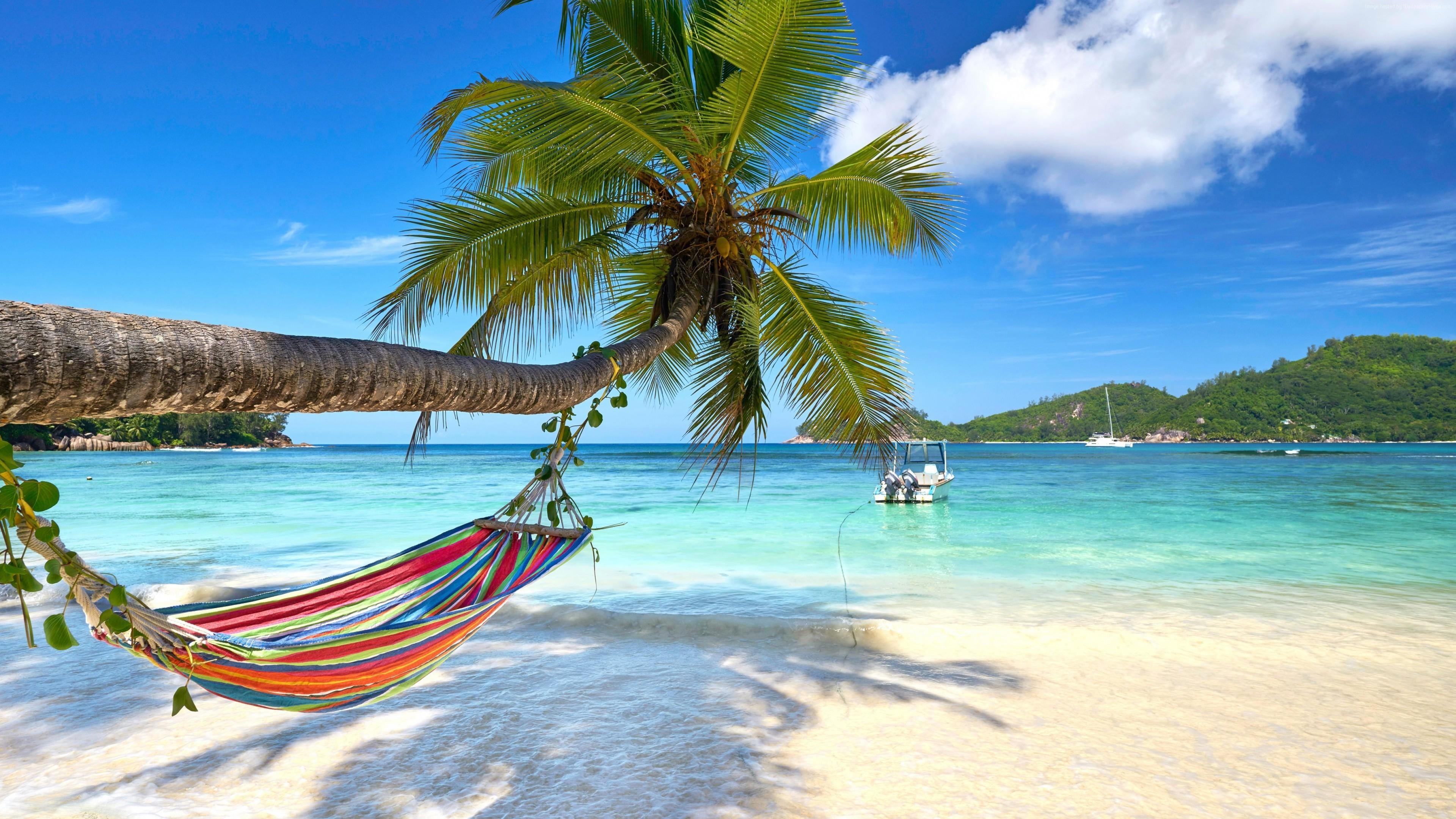 Wallpaper Turquoise, beach, palm, 4K, Travel Wallpaper ...