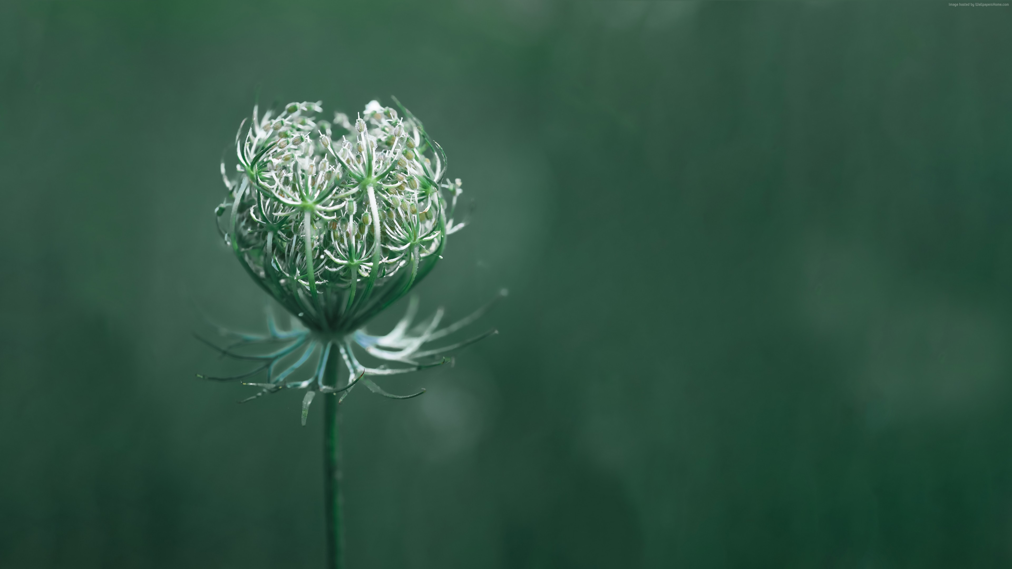 Wallpaper flower, green, macro, 10K, Nature