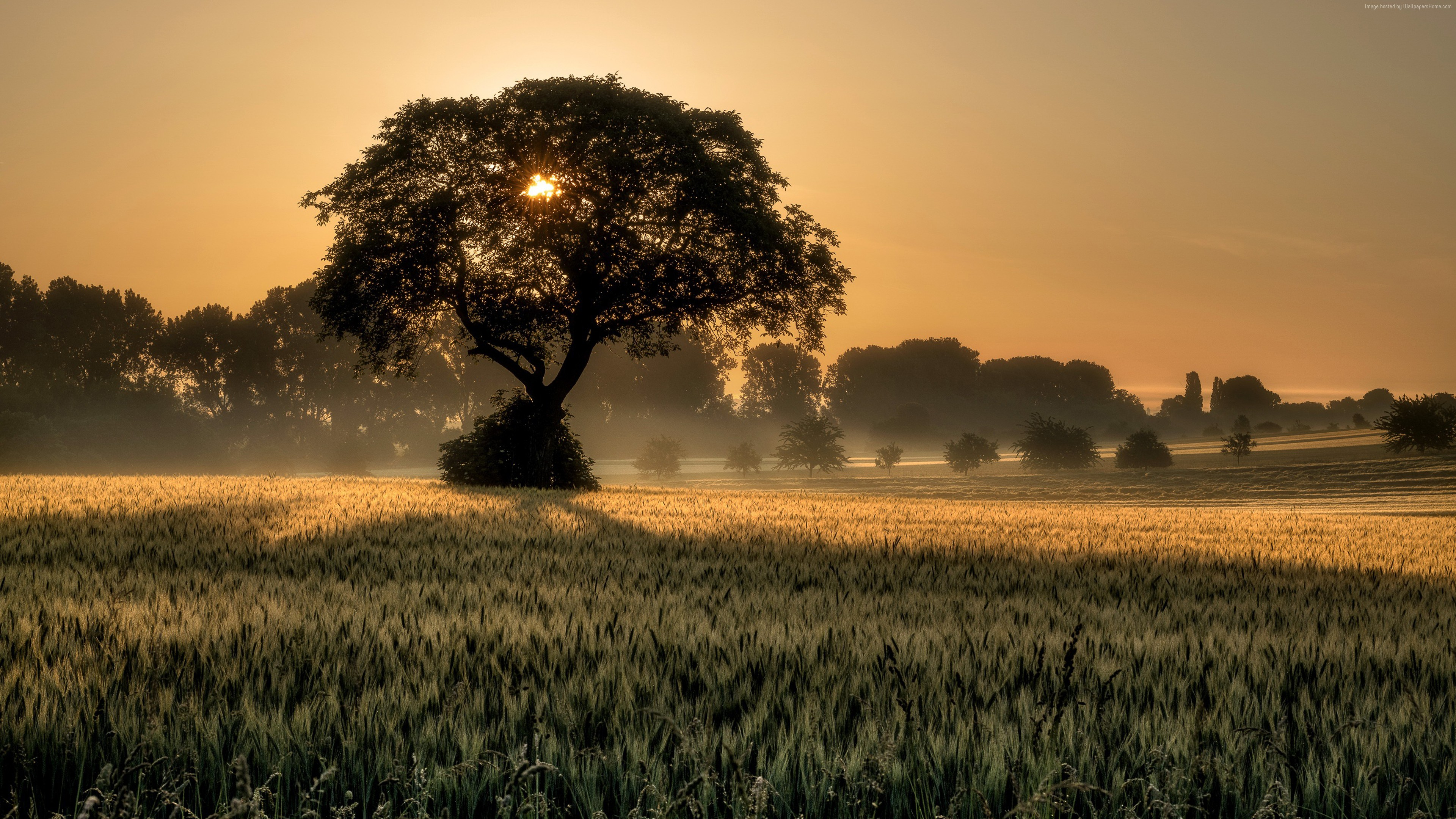Wallpaper sunset, tree, field, 4K, Nature