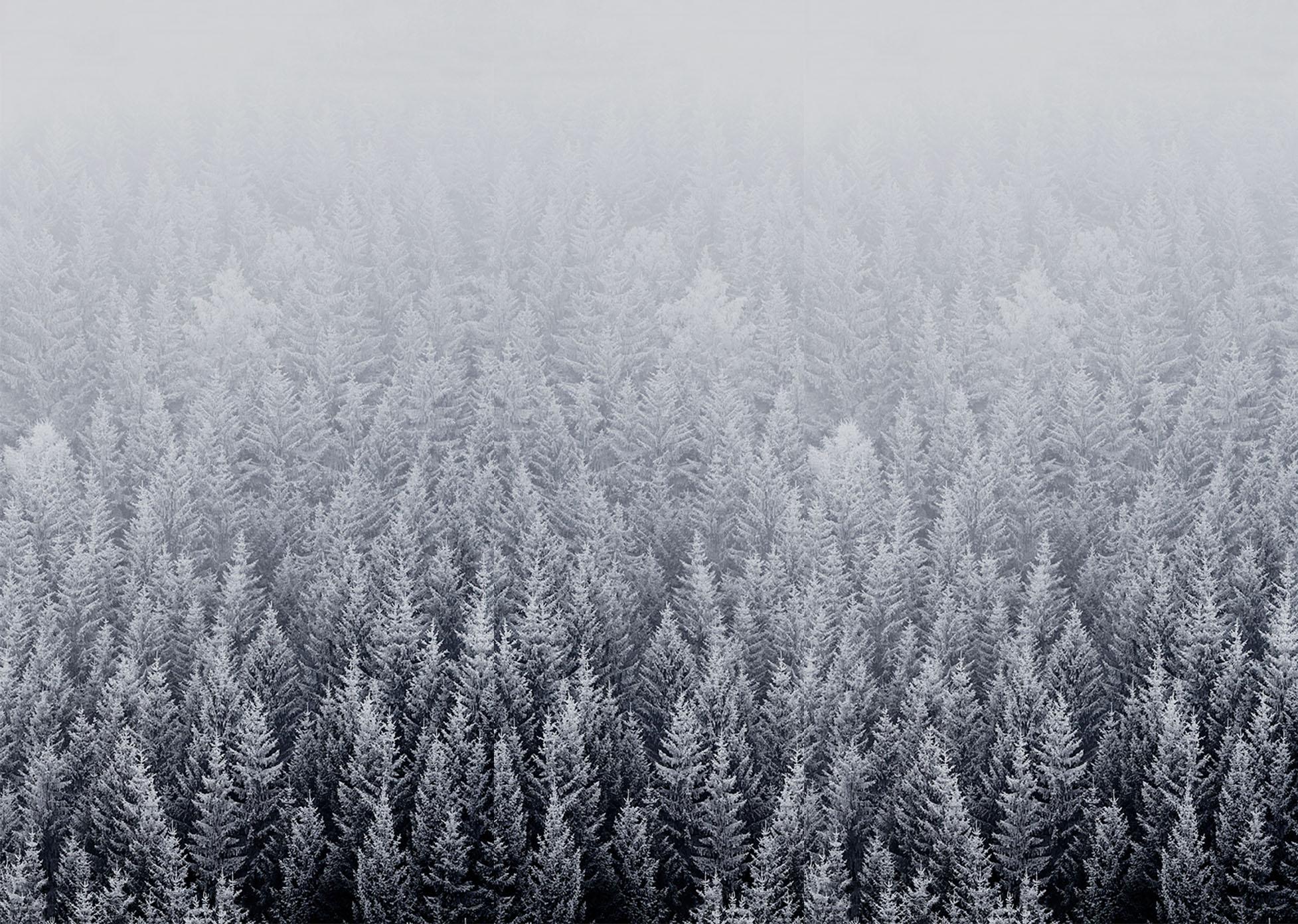 iOS 8 Snow Forest Default Mac Desktop